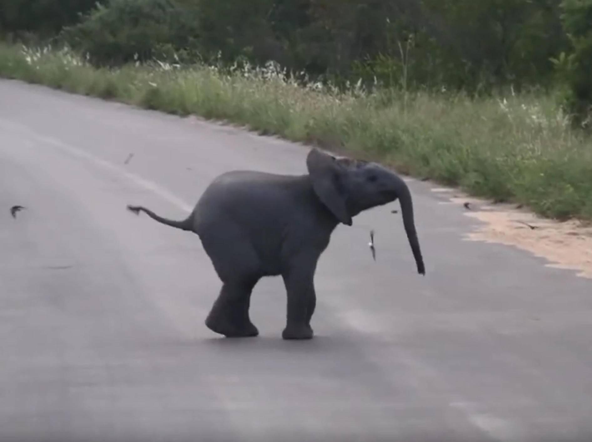 Schwierige Mission: Elefantenbaby versucht, Vögel einzufangen – Bild: YouTube / Kruger Sightings