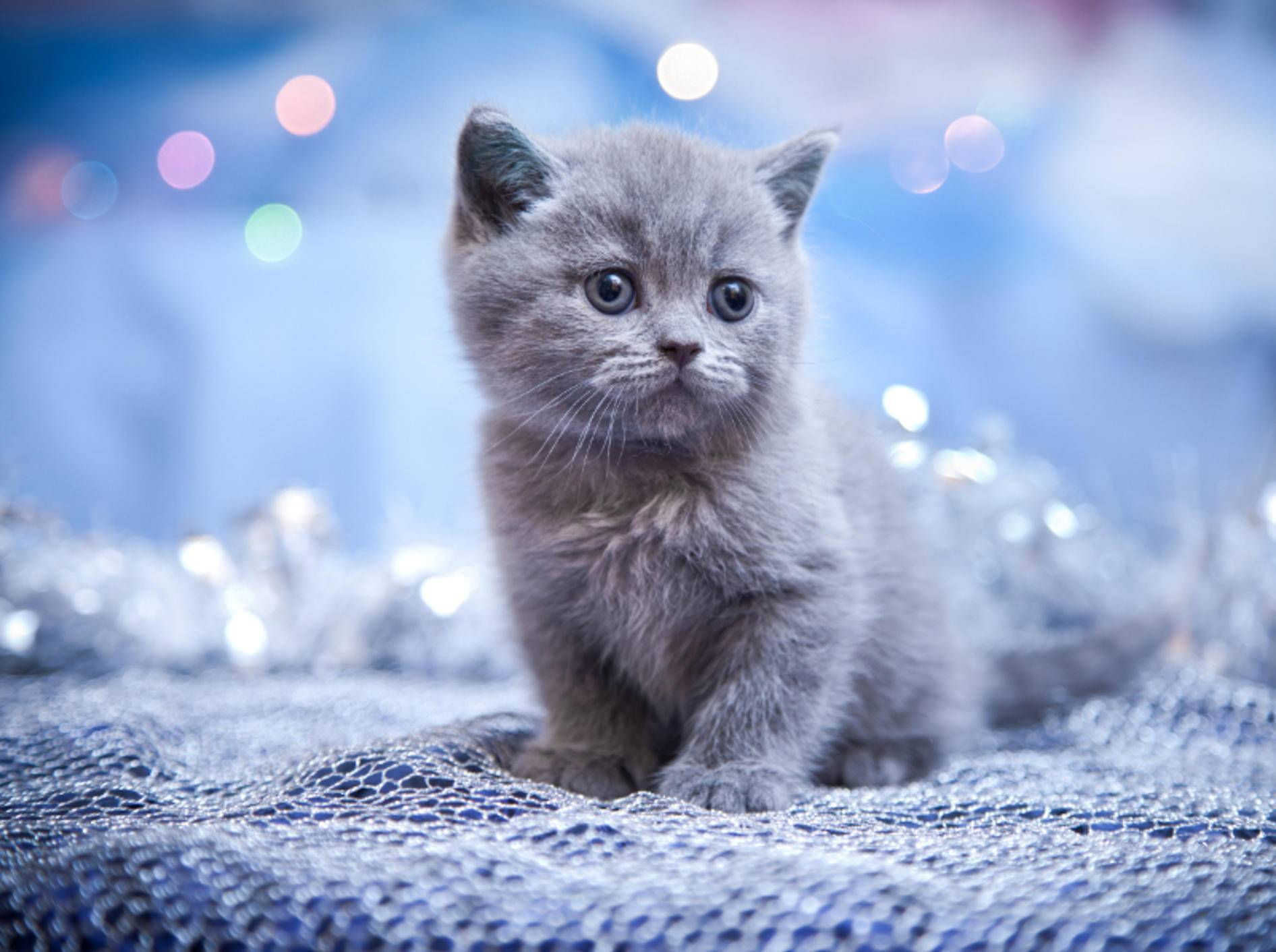 So ein flauschig-fluffiges Kätzchen! Zum Verlieben! – Bild: Shutterstock / dezi