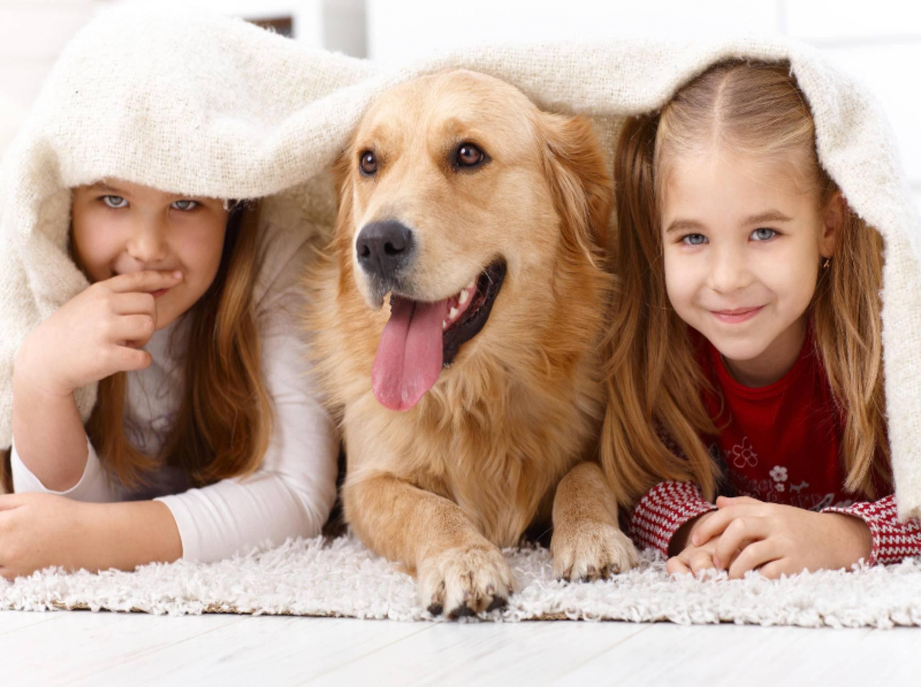 Haustiere sind auch einfach prima Spielgefährten – Shutterstock / StockLite
