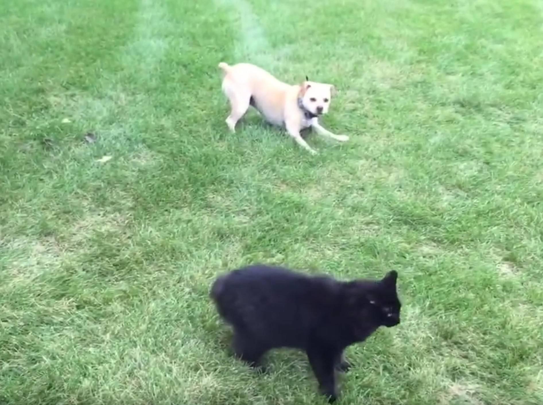 """Hund nervt Katze: """"Nun spiel endlich mit mir!"""" – Bild: YouTube / Adam Howarth"""