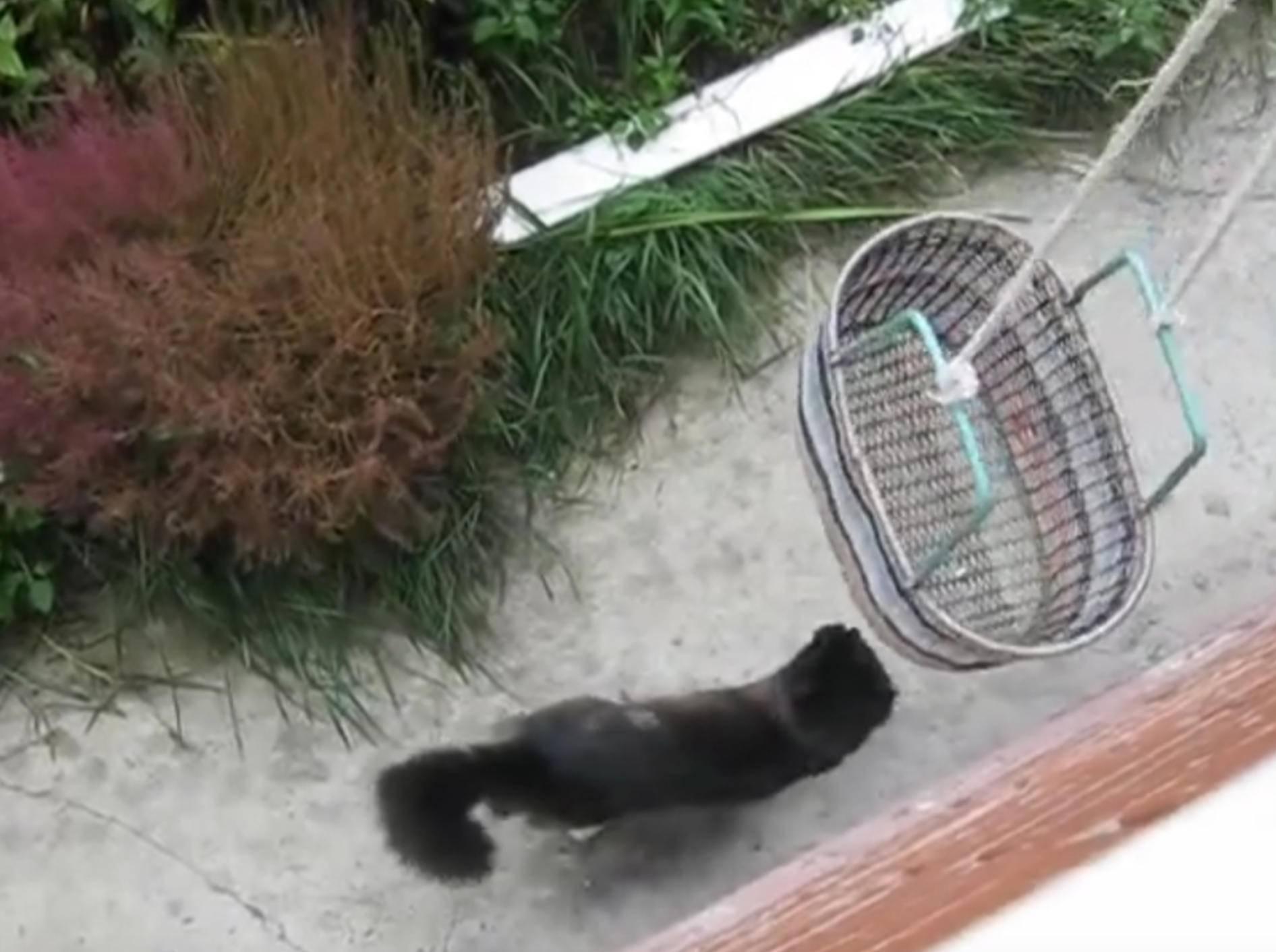 Praktisch: Ein Aufzug für die Katze – Bild: YouTube / ignoramusky