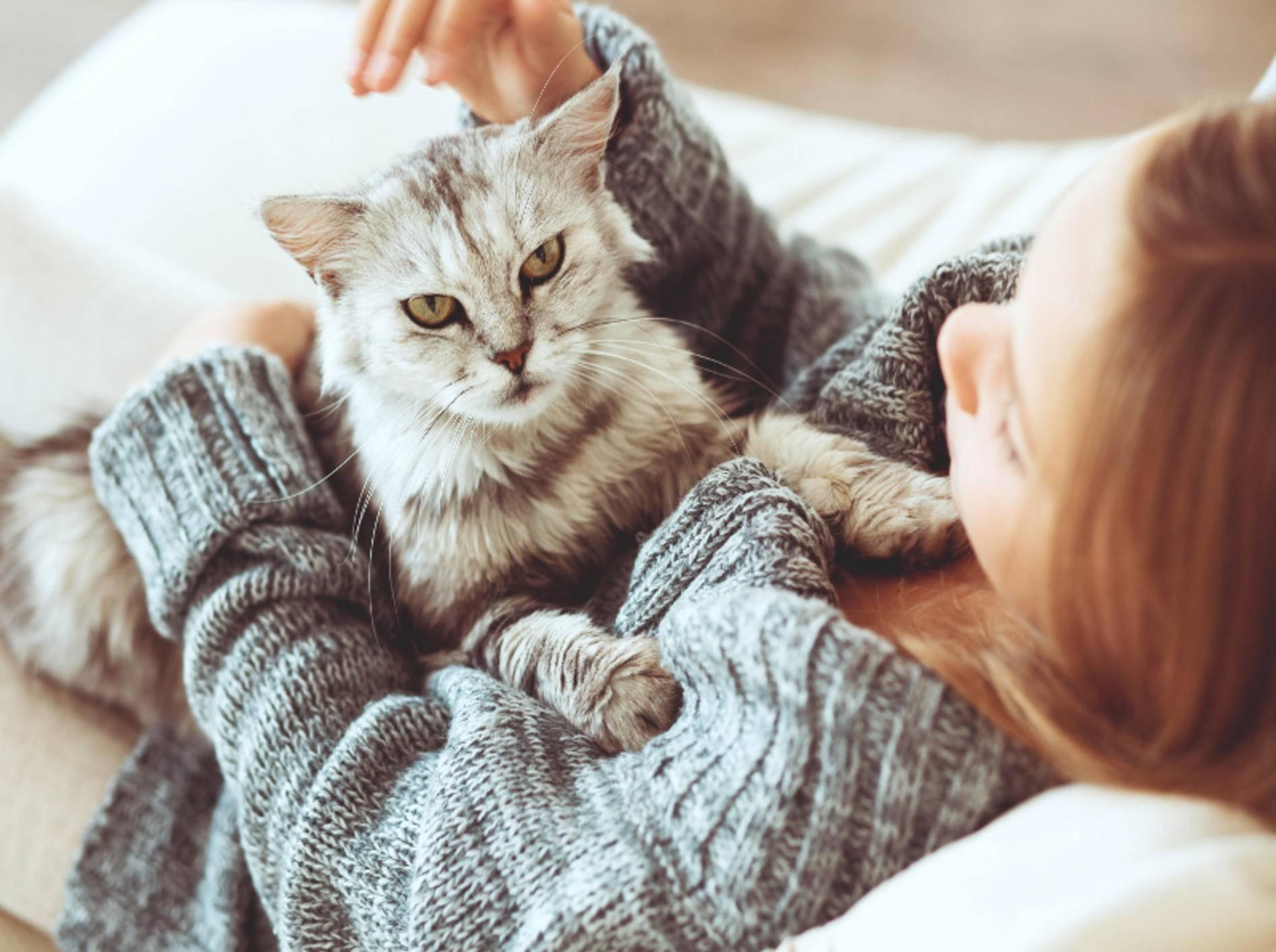 Einige Mythen können Ihrer Katze schaden – Shutterstock / Alena Ozerova