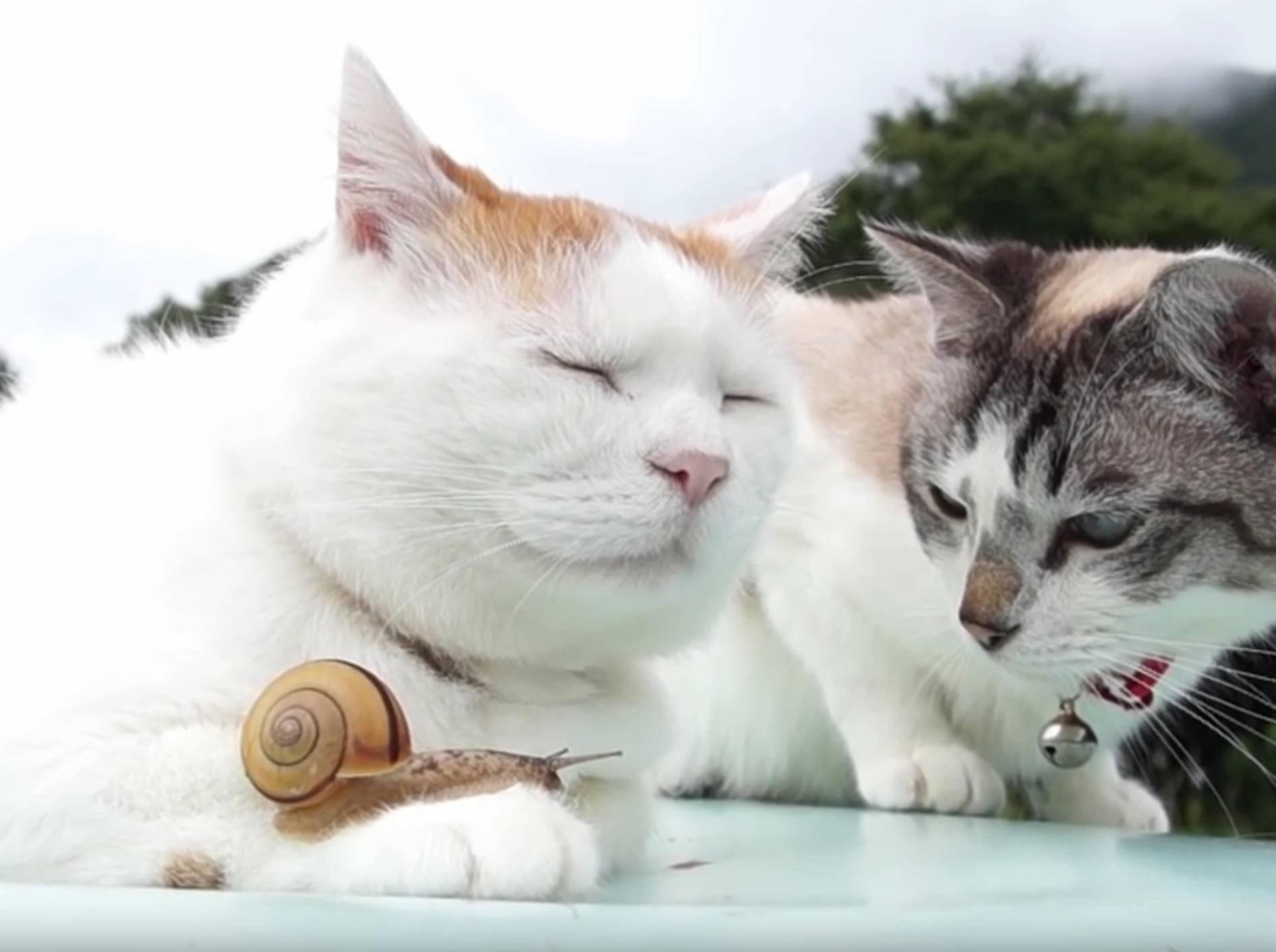 Freundschaft kennt keine Grenzen: Katze knuddelt Schnecke – Bild: YouTube / かご猫 Blog