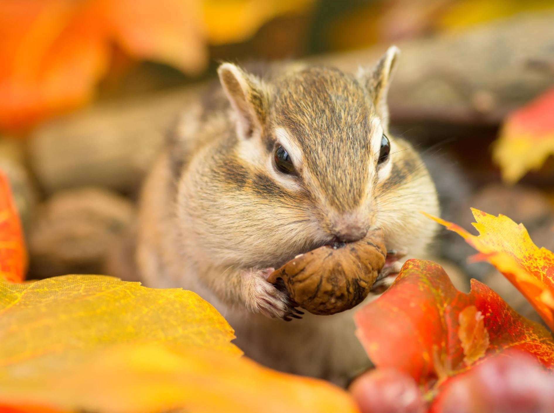 """""""Knabber, knabber, ist das lecker!!!"""" – Bild: Shutterstock / stock_shot"""