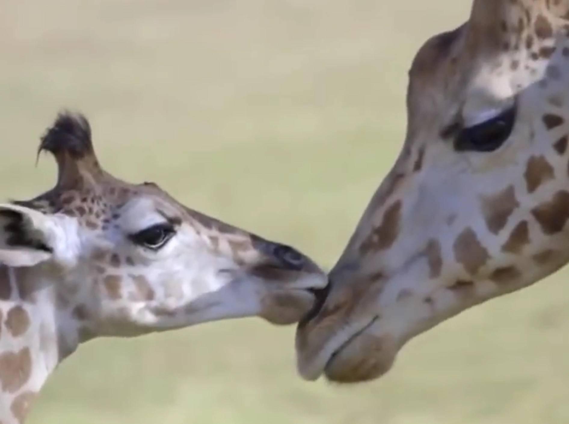 Diese Tierbabys haben ihre Mama sooo lieb – Bild: YouTube / The Dodo