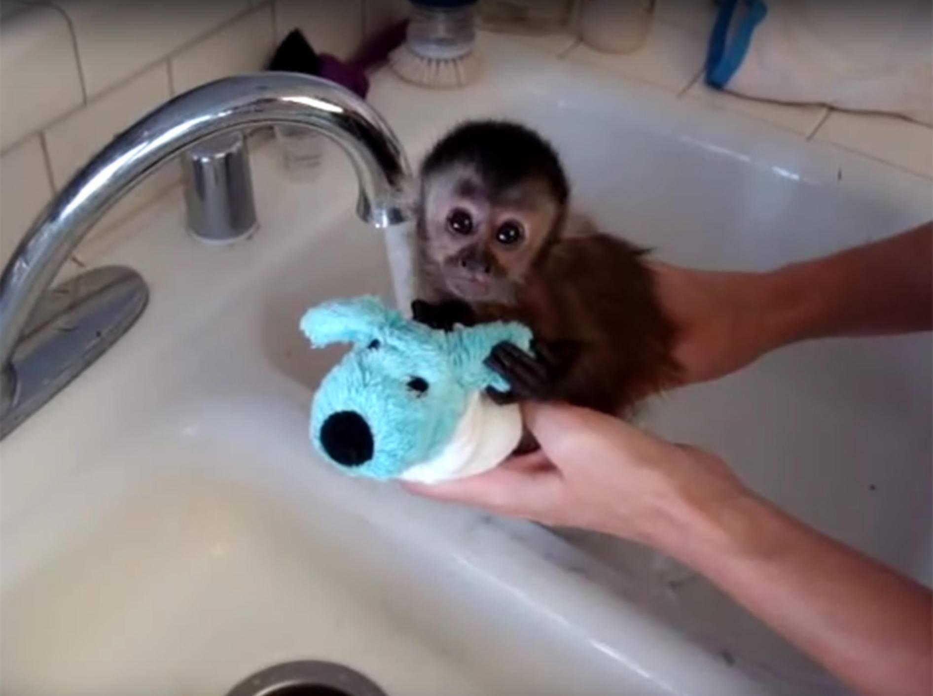 Kleines Affenbaby Nala beim Baden – YouTube / jenniferthall