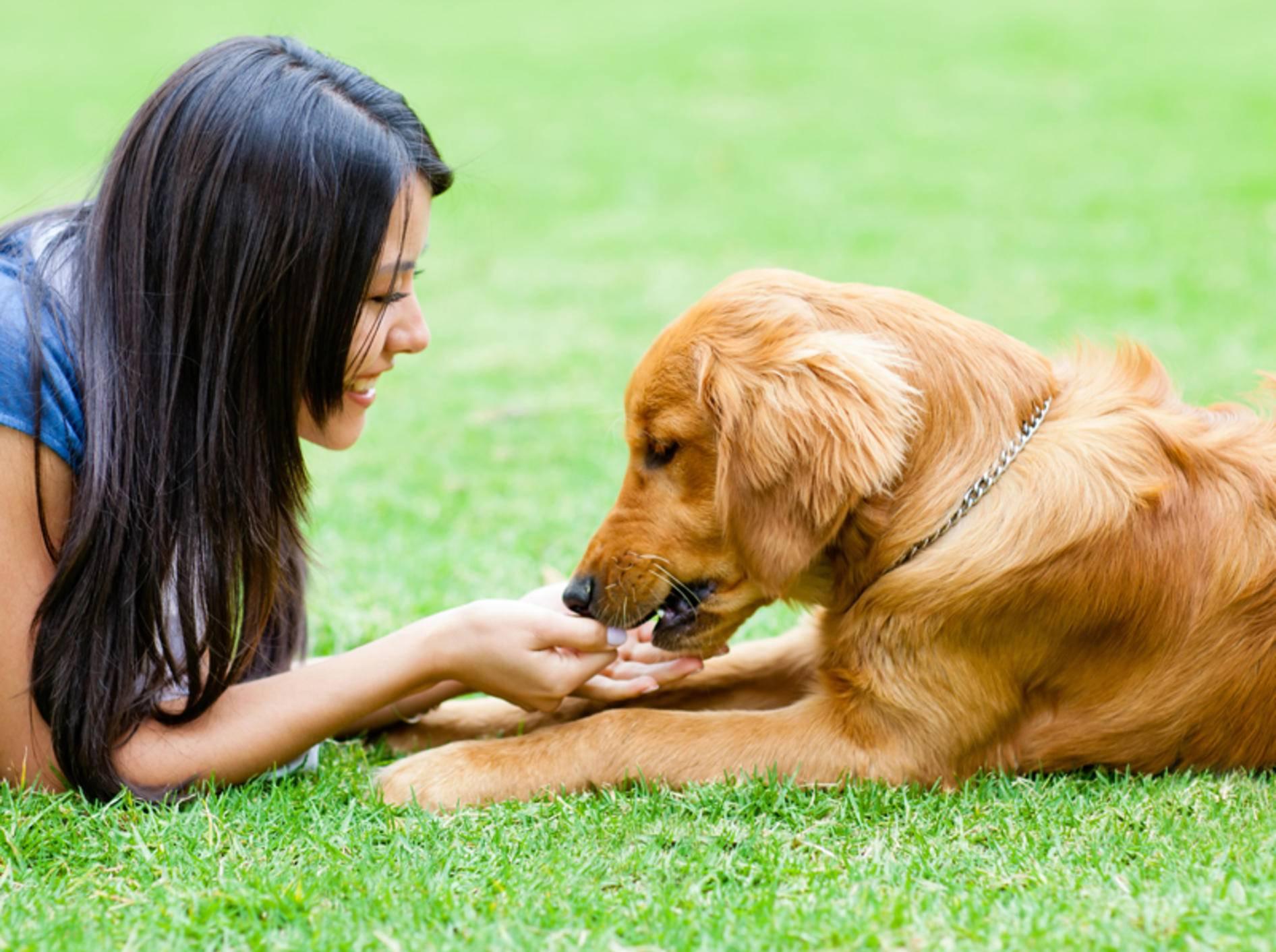 Alles Gute kommt von Frauchen, lernt der Hund im Anti-Giftköder-Training – Shutterstock / Andresr