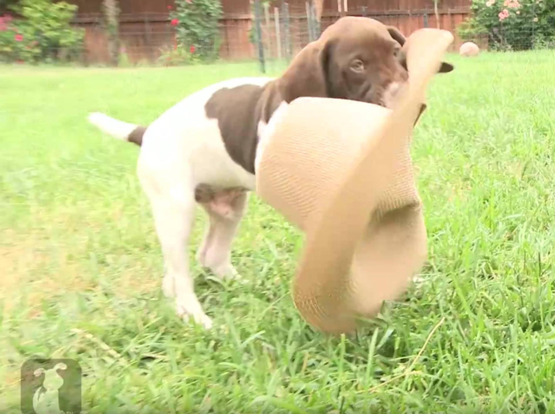Ein tolles Spielzeug, dieser Hut! – YouTube / The Pet Collective