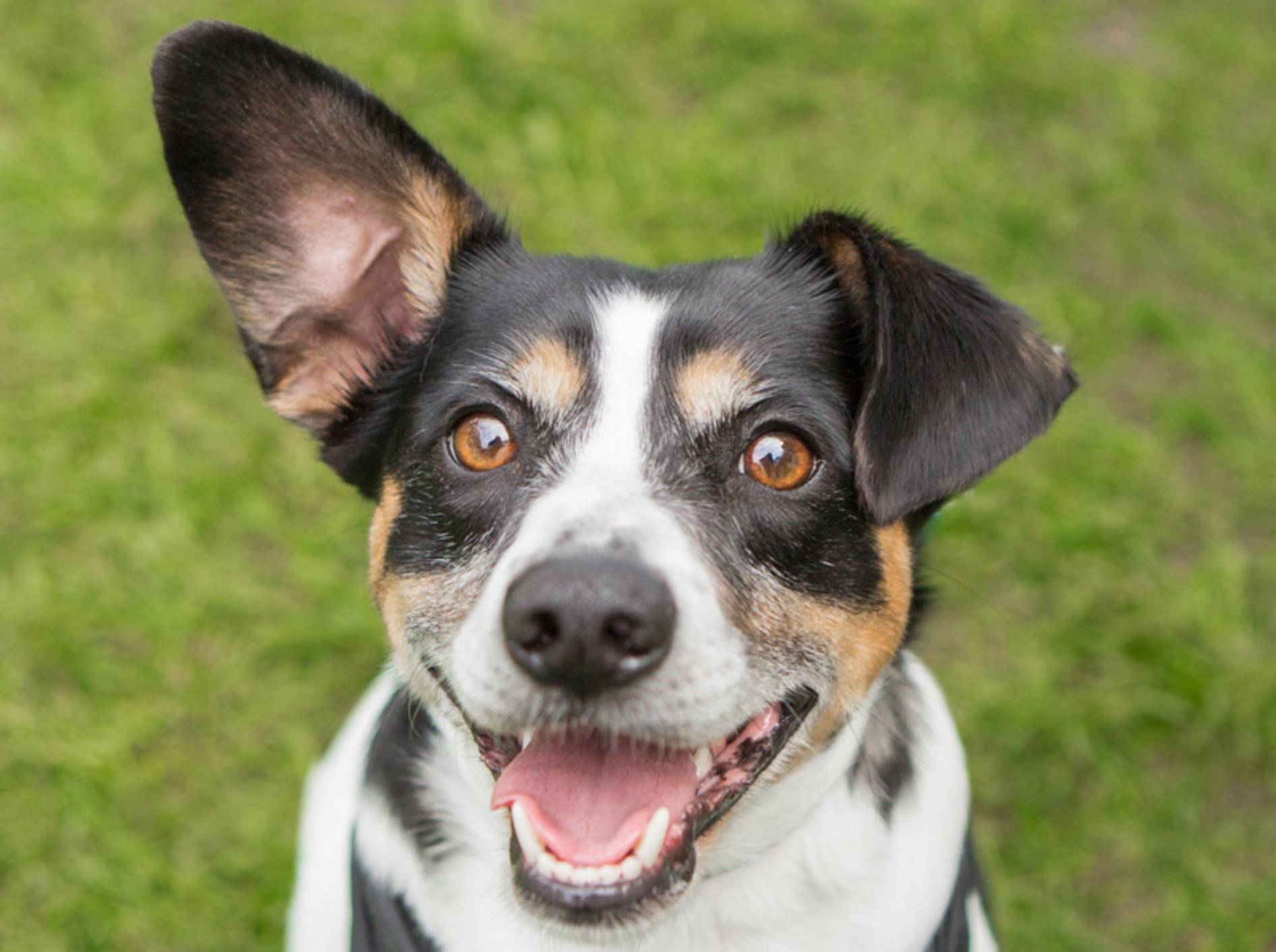 """""""Ich bin ganz Ohr"""", denkt dieser Hund – Shutterstock / InBetweentheBlinks"""