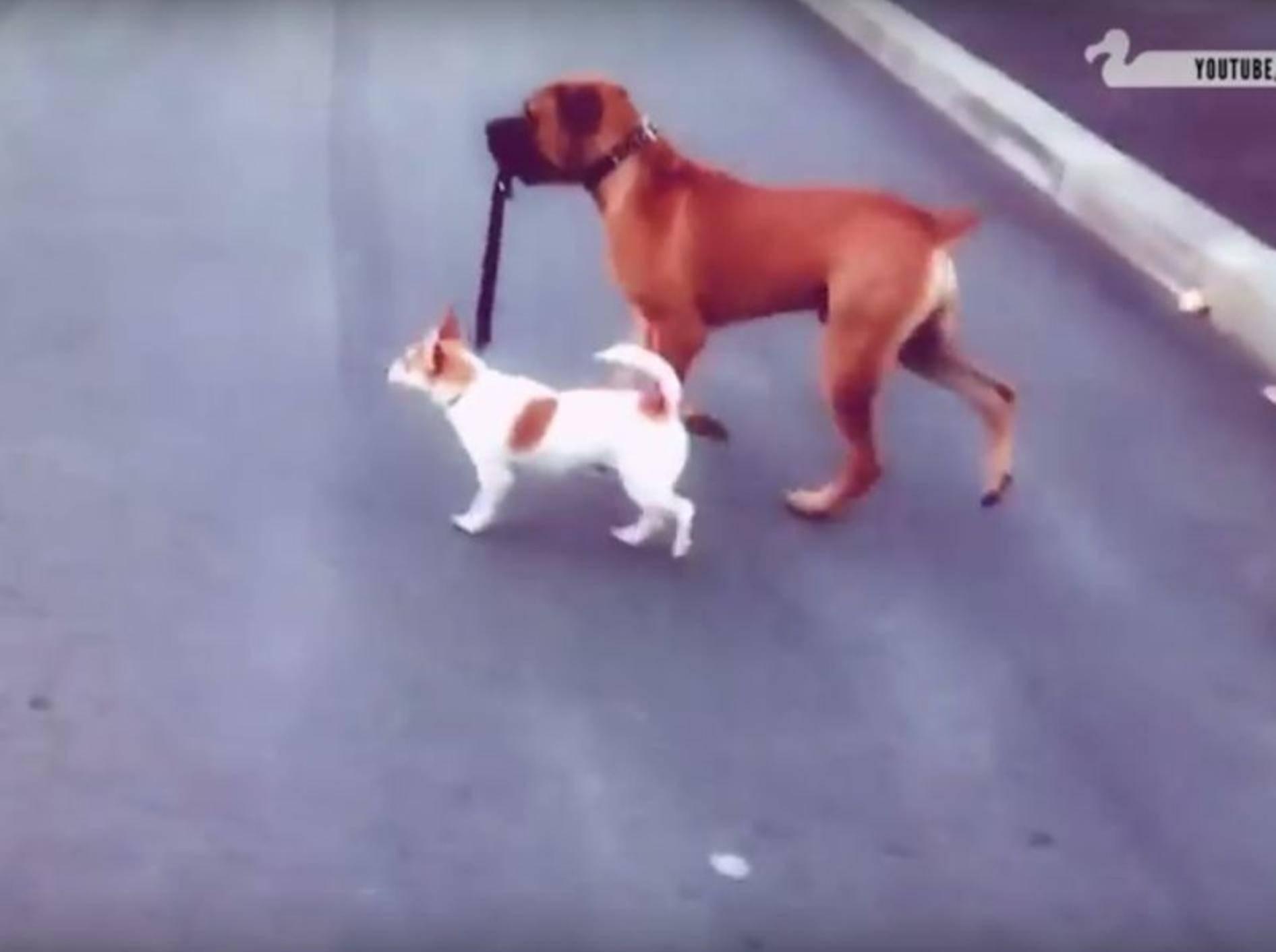 Diese Hunde sind beste Freunde – YouTube / The Dodo