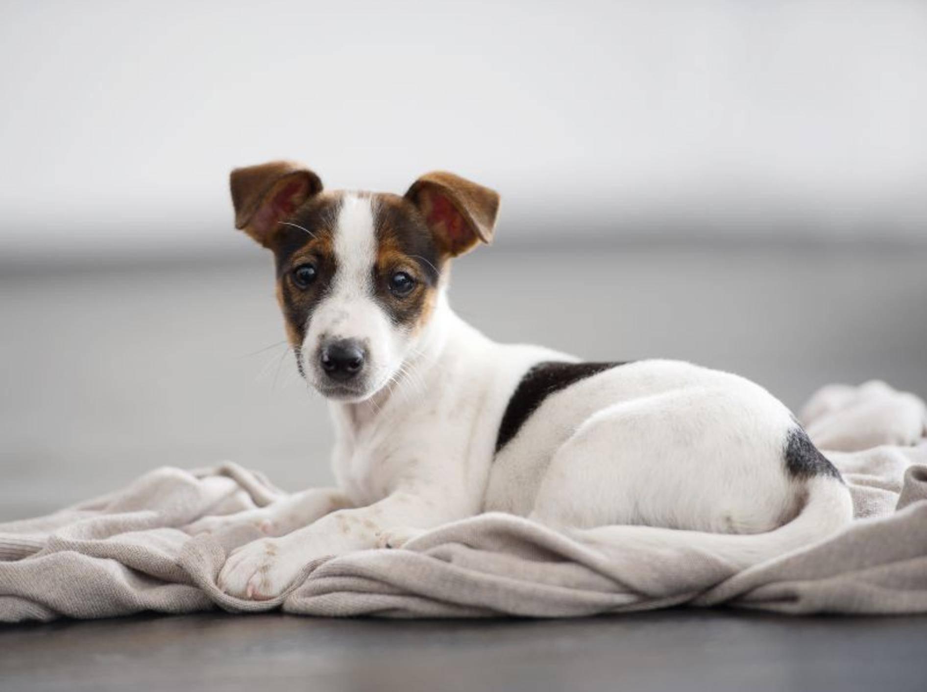 Etwas stimmt nicht mit dem Hund? Vielleicht weiß ein Tierpsychologe Rat – Shutterstock / Beauty photographer