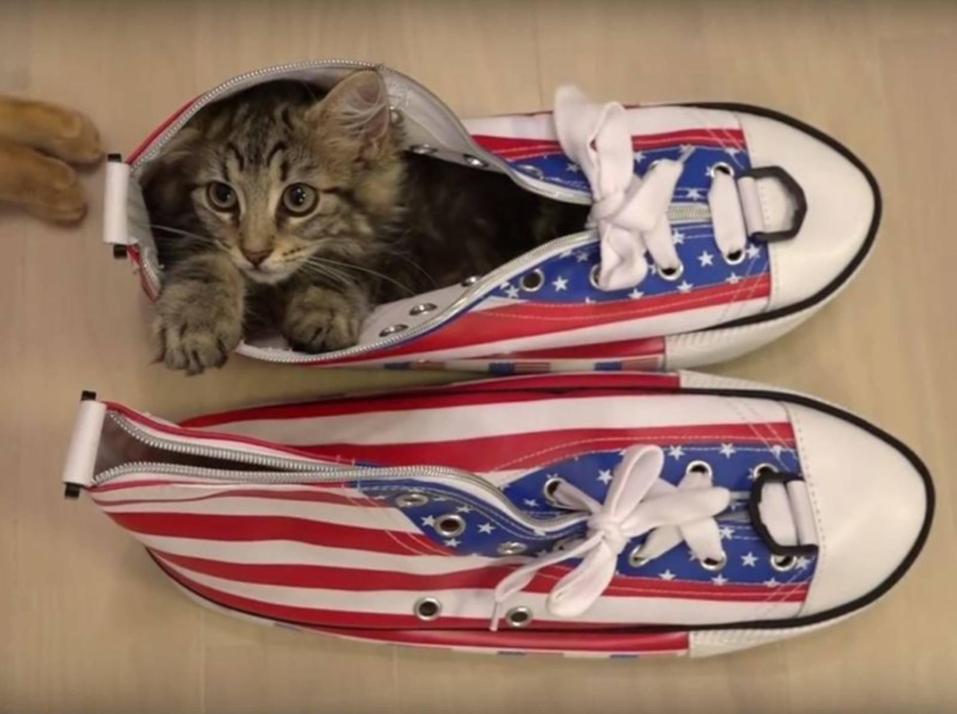 Kätzchen Osamu liebt seinen Schuh – YouTube / 10 Cats