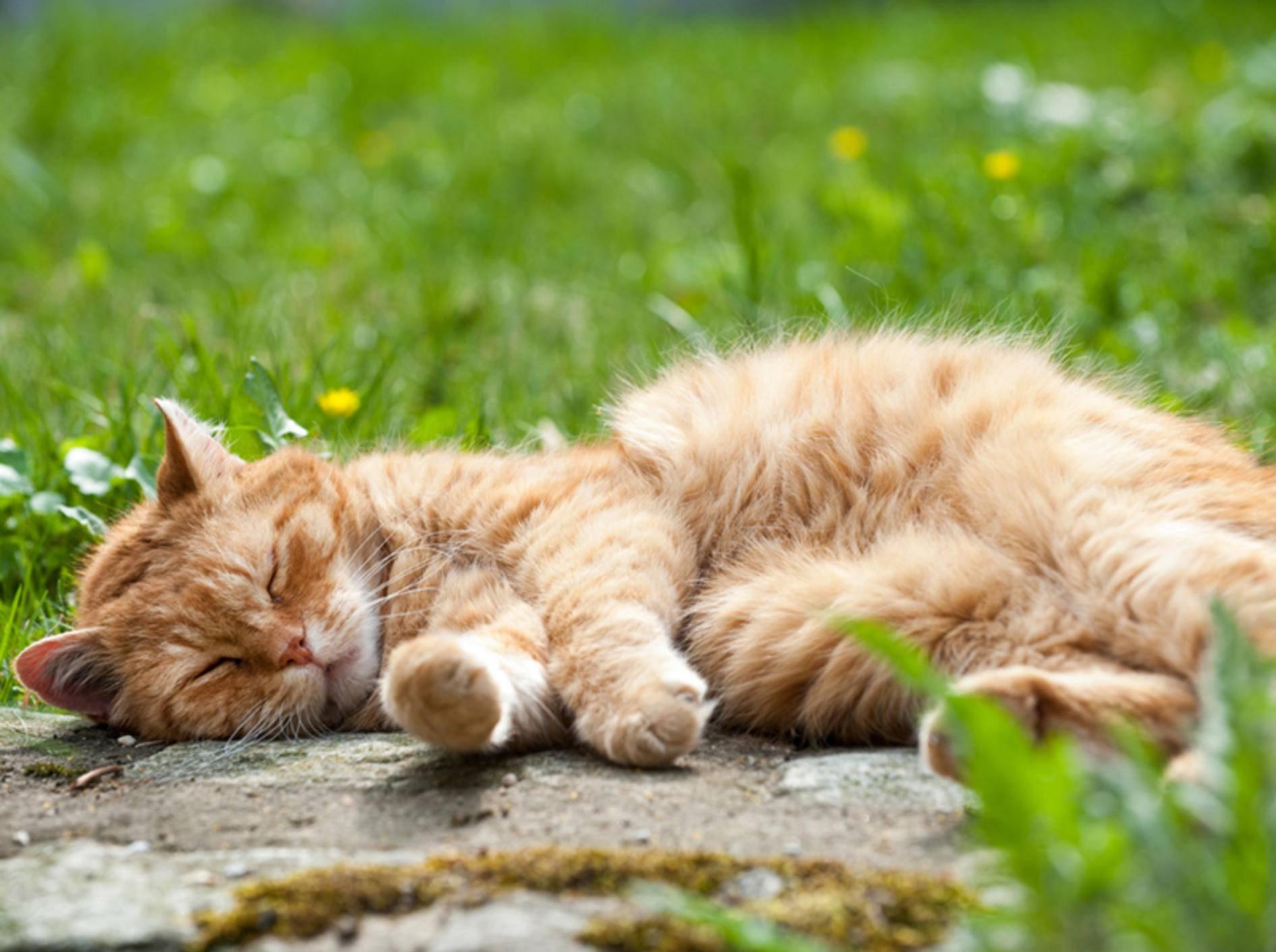 Ob Ihre Katze blind ist, erkennen Sie an verschiedenen Anzeichen – Bild: Shutterstock / Dora Zett