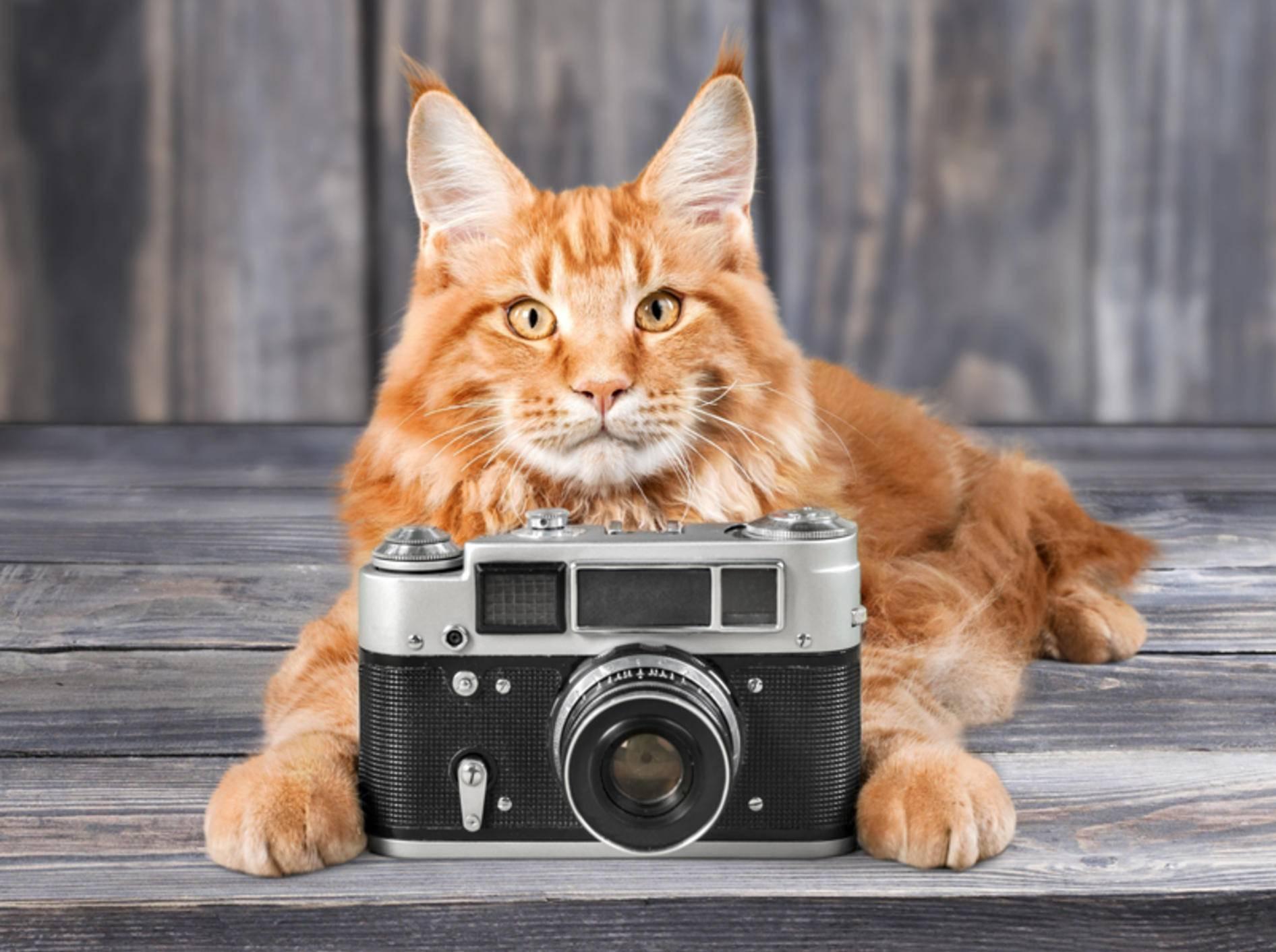 Katzenfotos: Aus Schnappschüssen können richtige Kunstwerke werden – Shutterstock / www.BillionPhotos.com