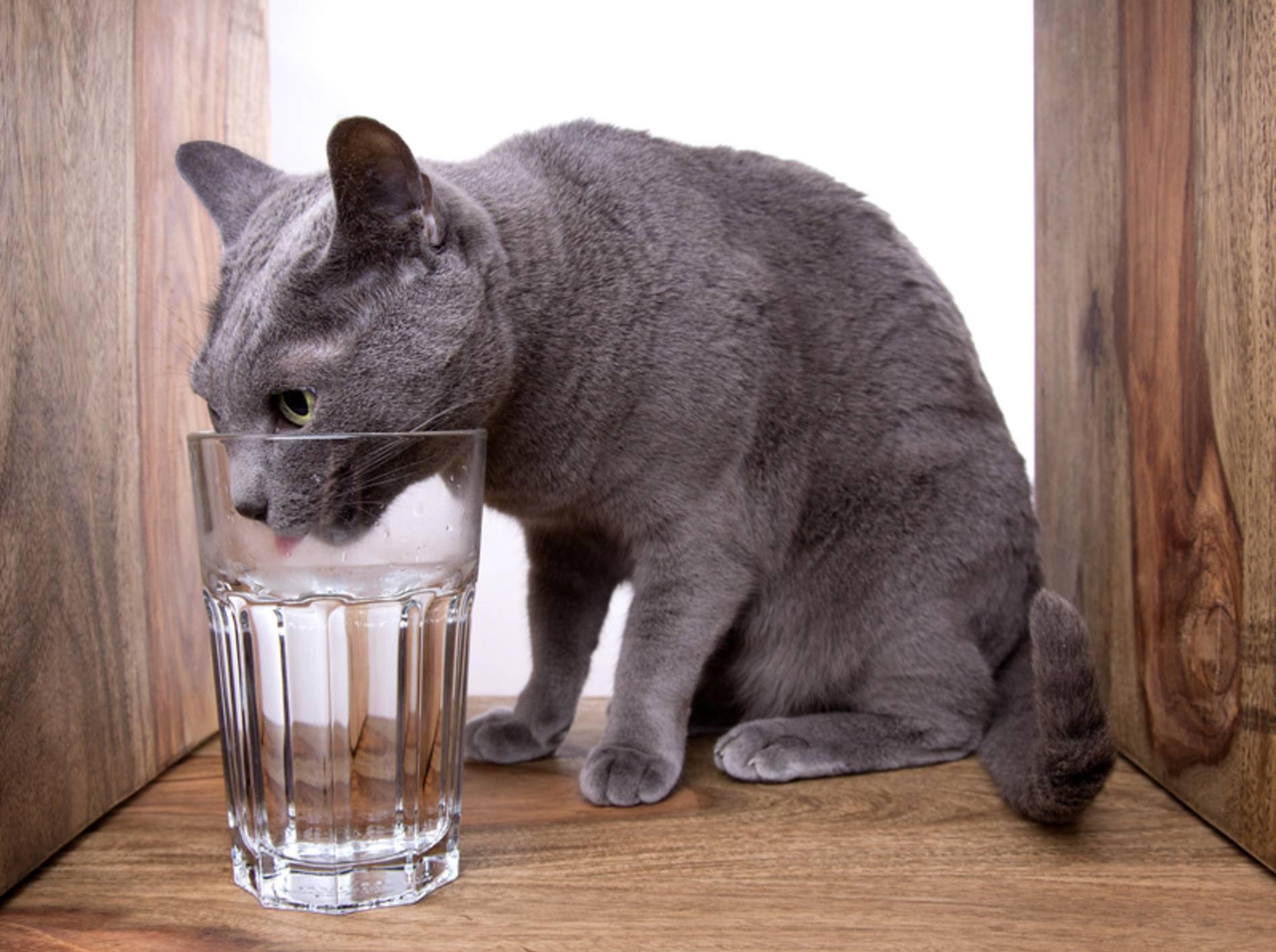 Aus dem Glas schmeckt dieser Katze das Wasser am besten – Shutterstock / Nailia Schwarz