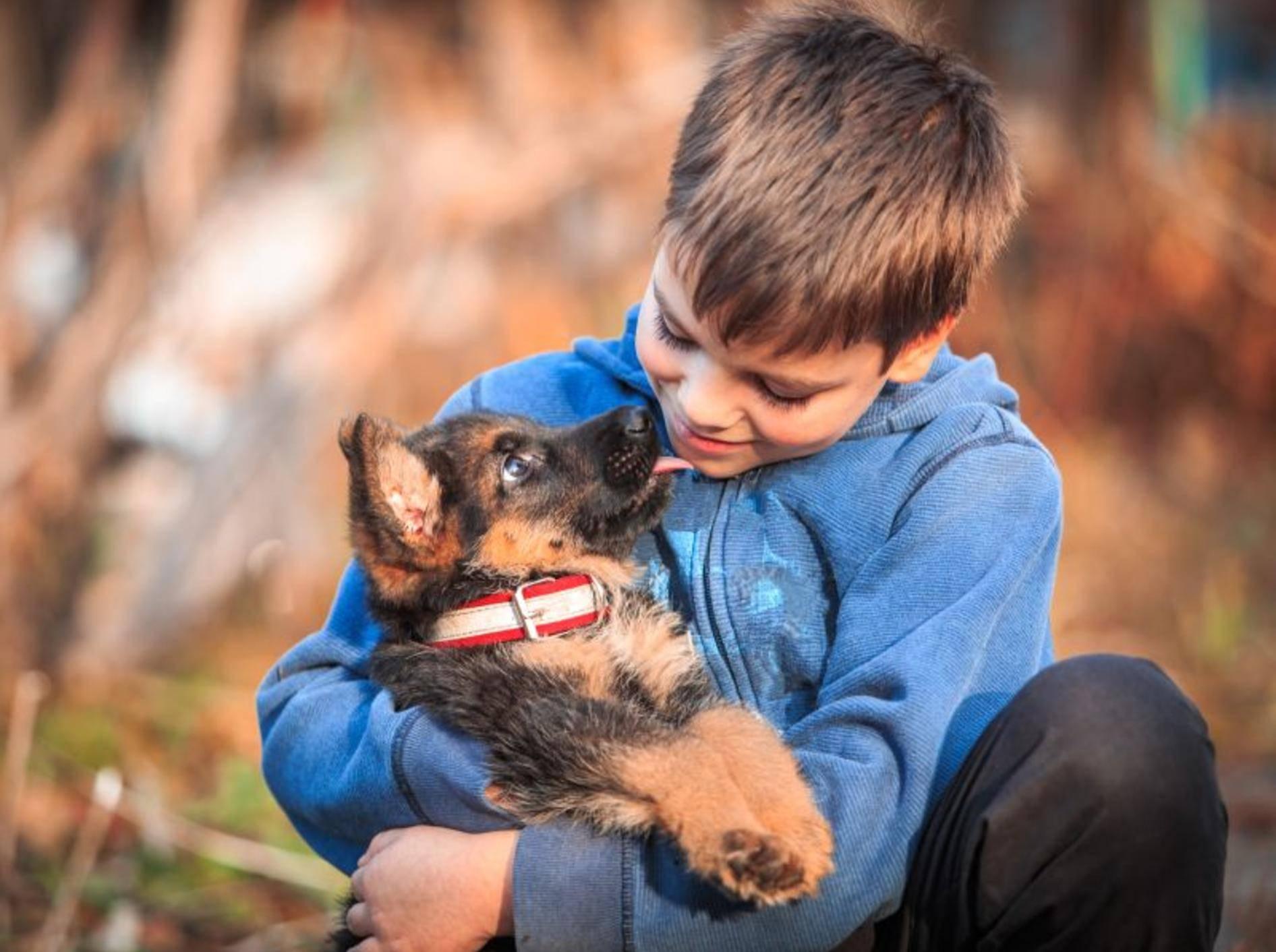 Hunde und Kinder können sich wunderbar ergänzen – Shutterstock / Stone36
