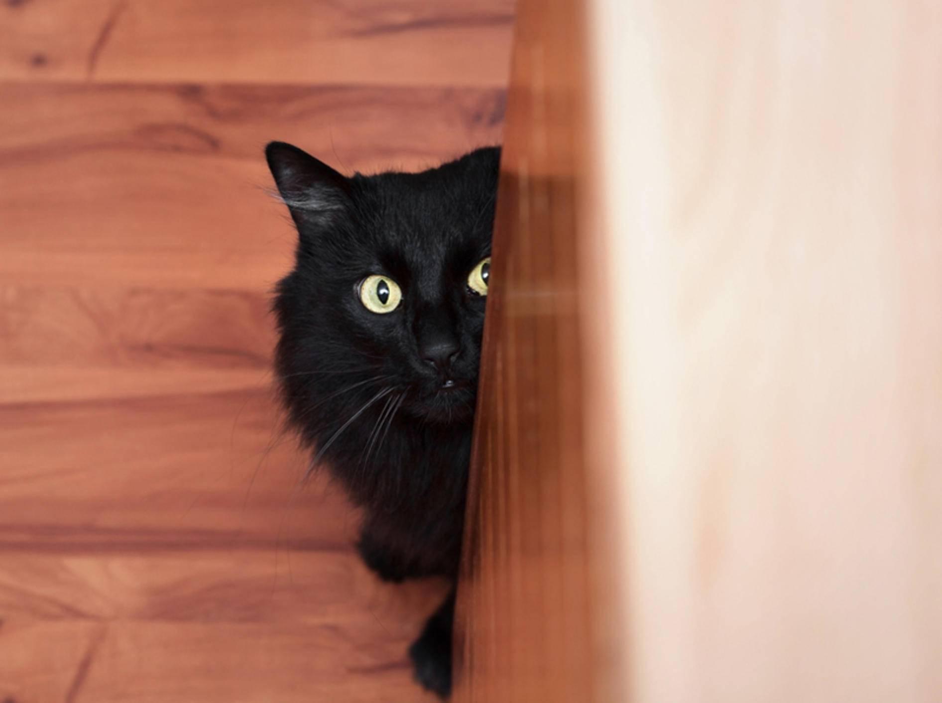 Eine Katze mit Angststörung lässt sich durchaus behandeln. – Bild: Shutterstock / misuma