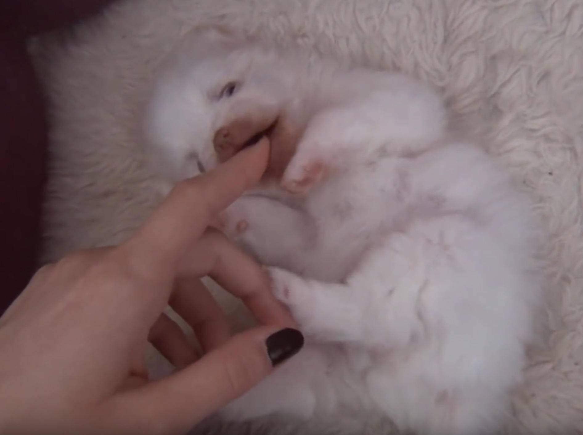 Der wohl flauschigste Welpe der Welt! – YouTube / Pup Property