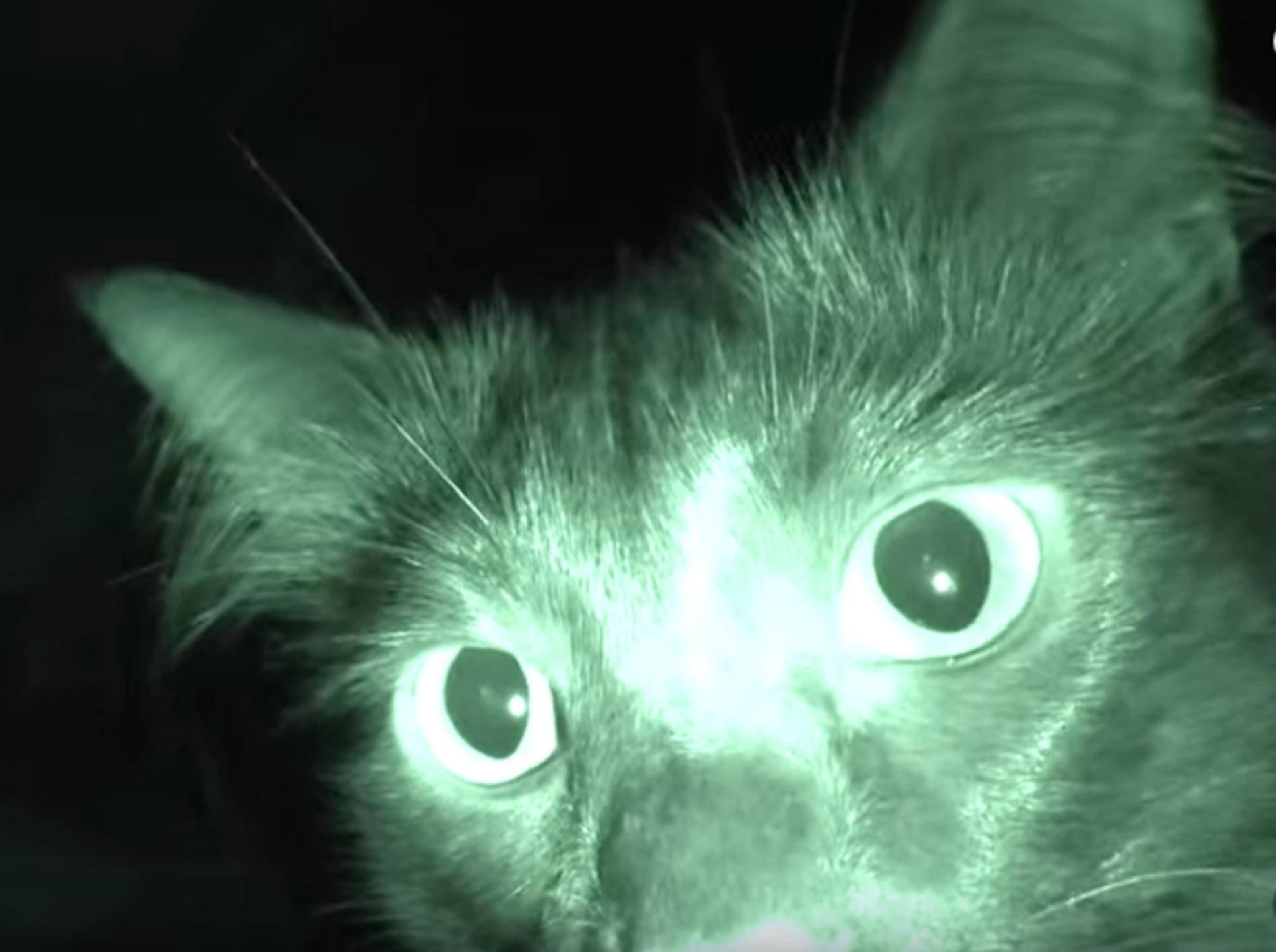 Nachts wird's gruselig: Cole und Marmalade an Halloween – Bild: YouTube / Cole and Marmalade