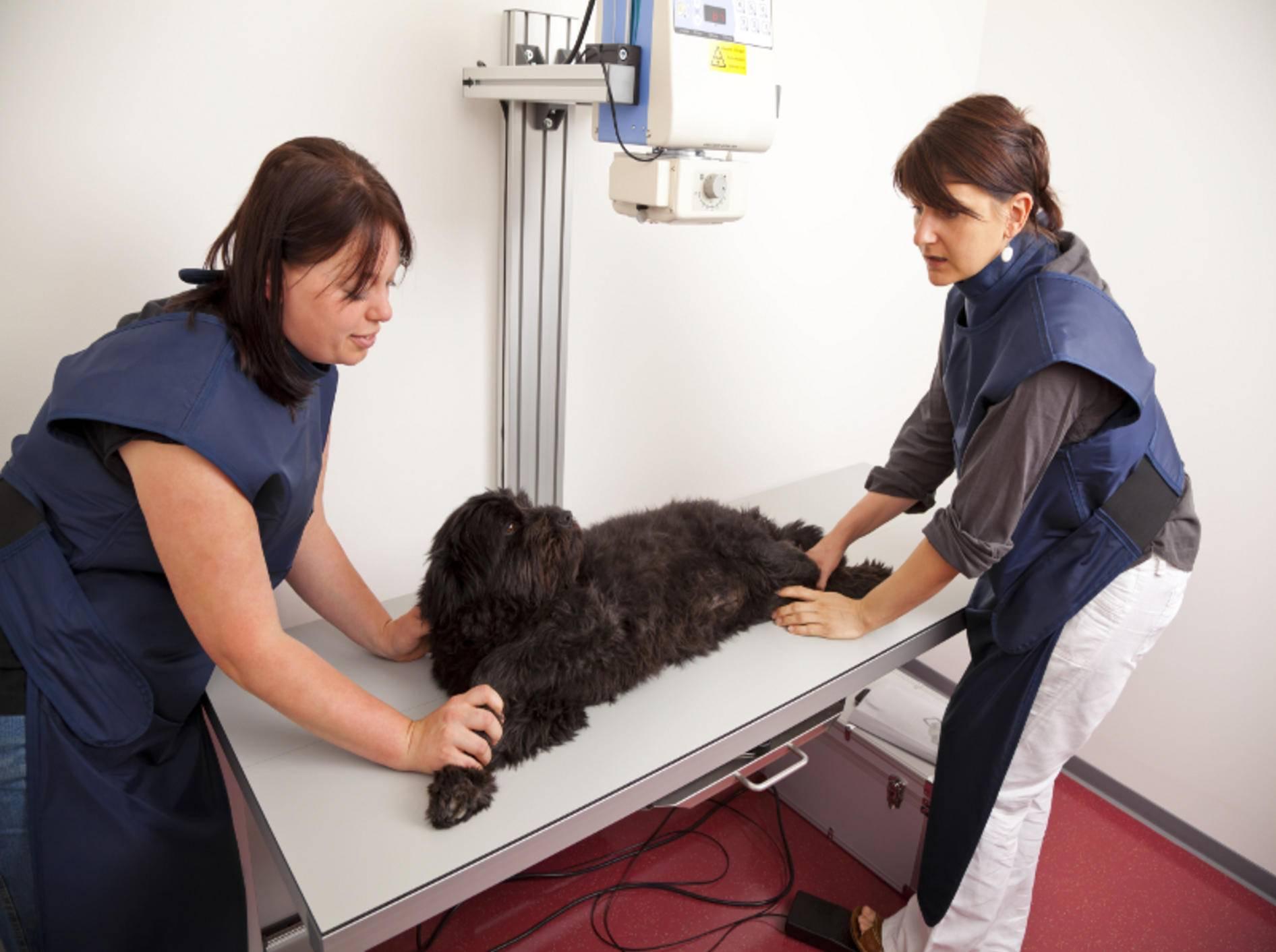Kein Hund lässt sich gerne röntgen – doch was muss, muss – Shutterstock / foto ARts