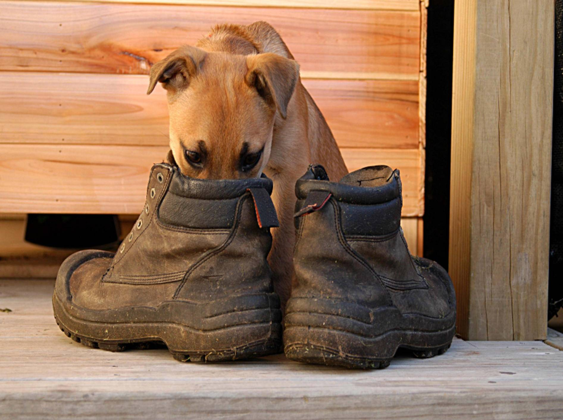 Jeder Hund setzt seine besonderen Riech-Talente gerne ein – Shutterstock / Shanta Giddens