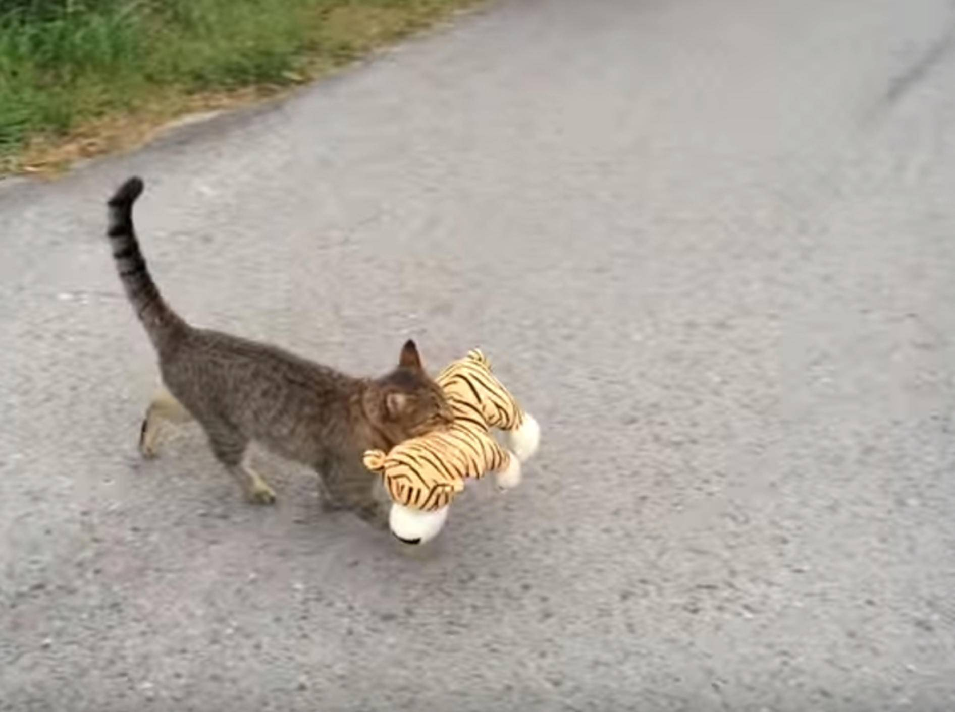 Pfiffige Katze klaut Kuscheltier vom Nachbarn – Bild: YouTube / Borut Birsa