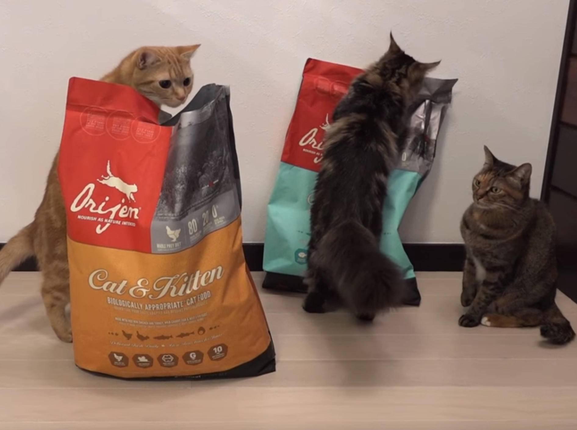 Freche Katzen: Selbstbedienung an der Futtertüte – Bild: YouTube / 10 Cats.
