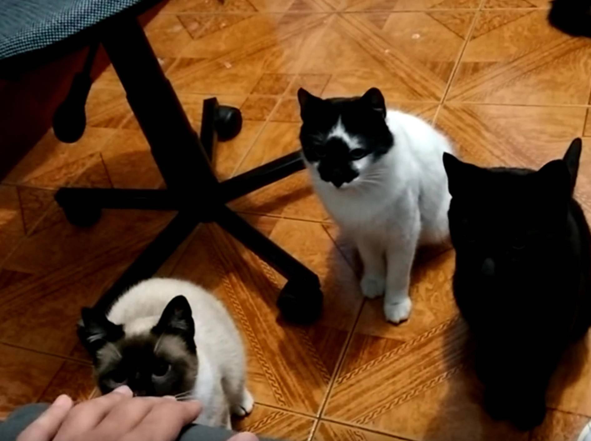 """Katzen horchen auf: """"Hört ihr dieses Geräusch auch?"""" – Bild: YouTube / The Six Cats Parade"""