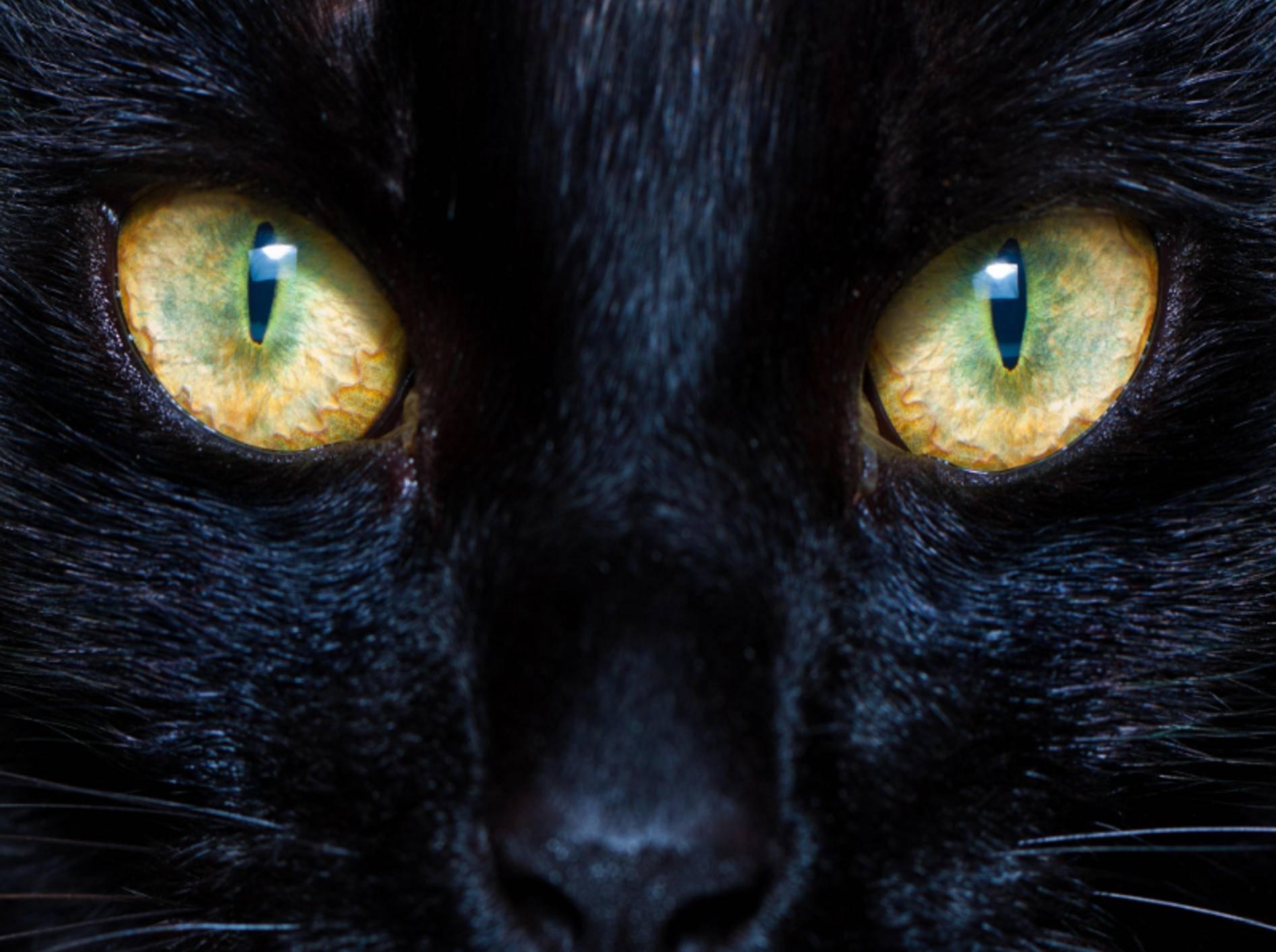Pupillen und Linsen bilden ein ideales Team in den Augen einer Katze – Shutterstock / Mooredesigns