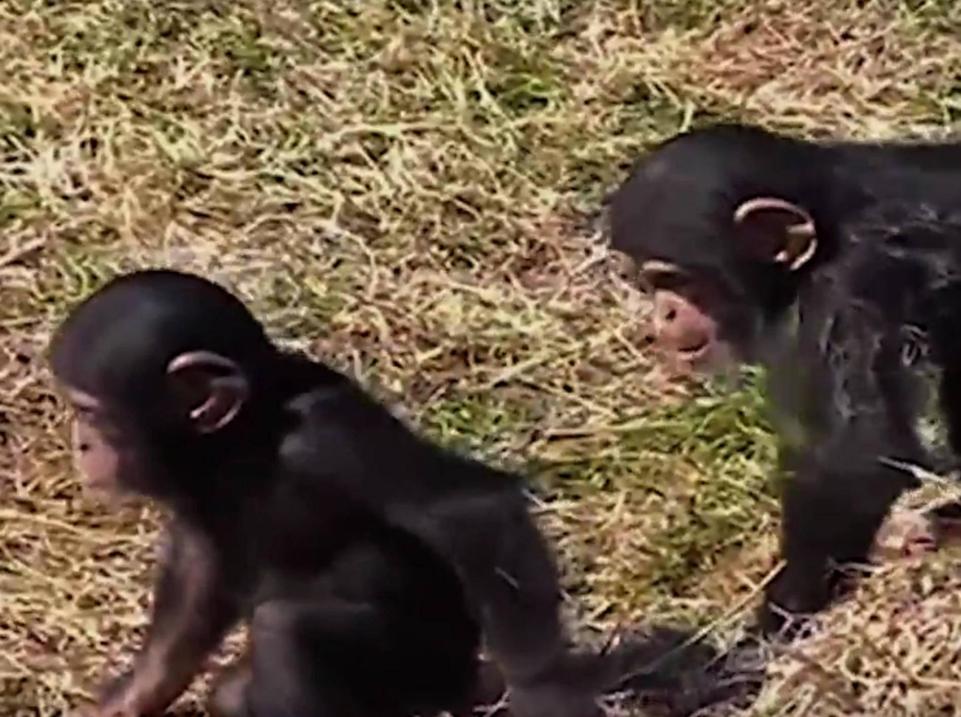 Was sich liebt, das neckt sich: So ist das mit Geschwistern – Bild: YouTube / The Dodo
