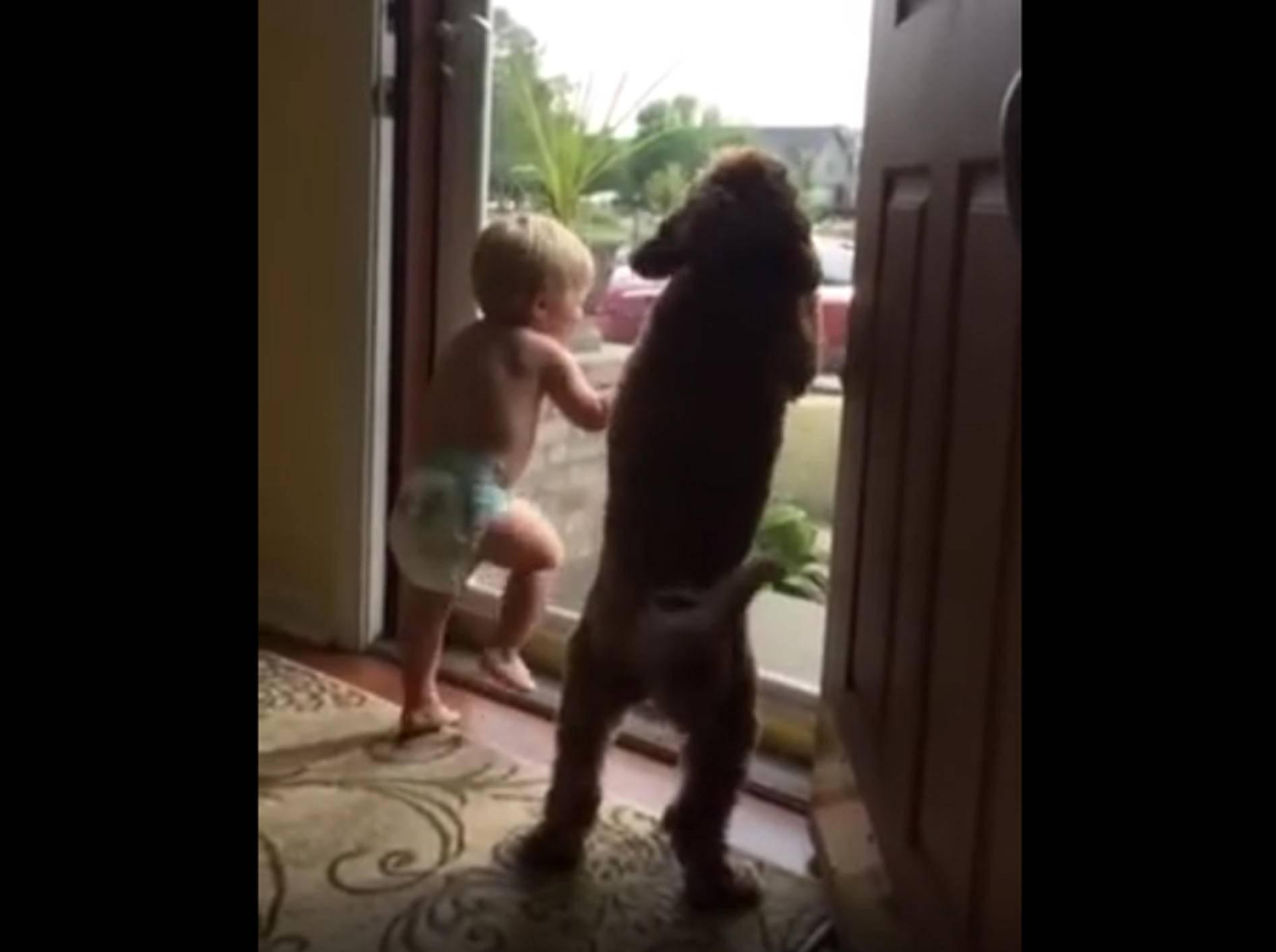"""""""Da kommt Papa! Juhu!"""": So ein schöner Empfang von Hund und Söhnchen – YouTube / Natalie G"""