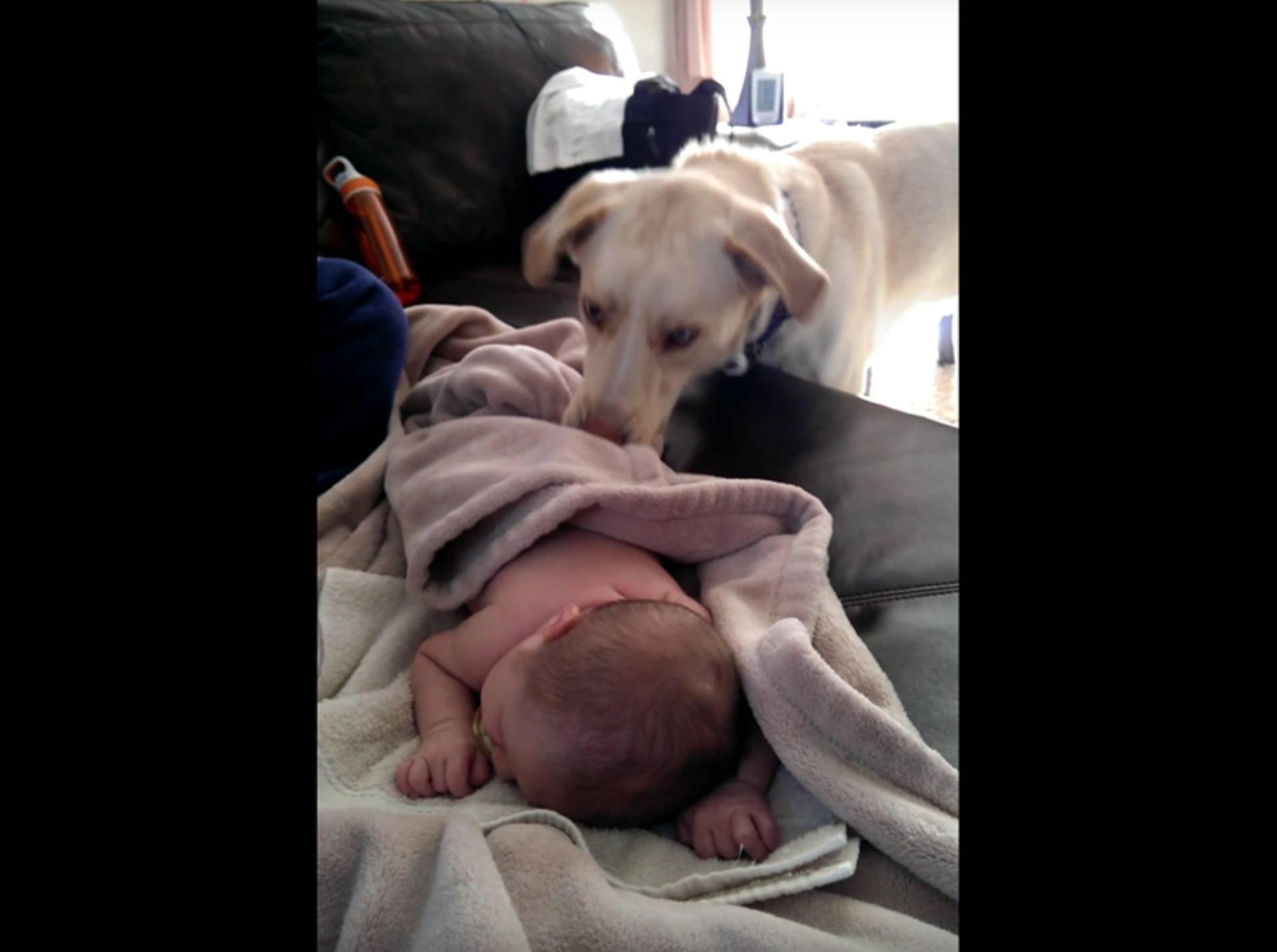 Lieber Hund deckt Baby zu – YouTube / baywatch106ify