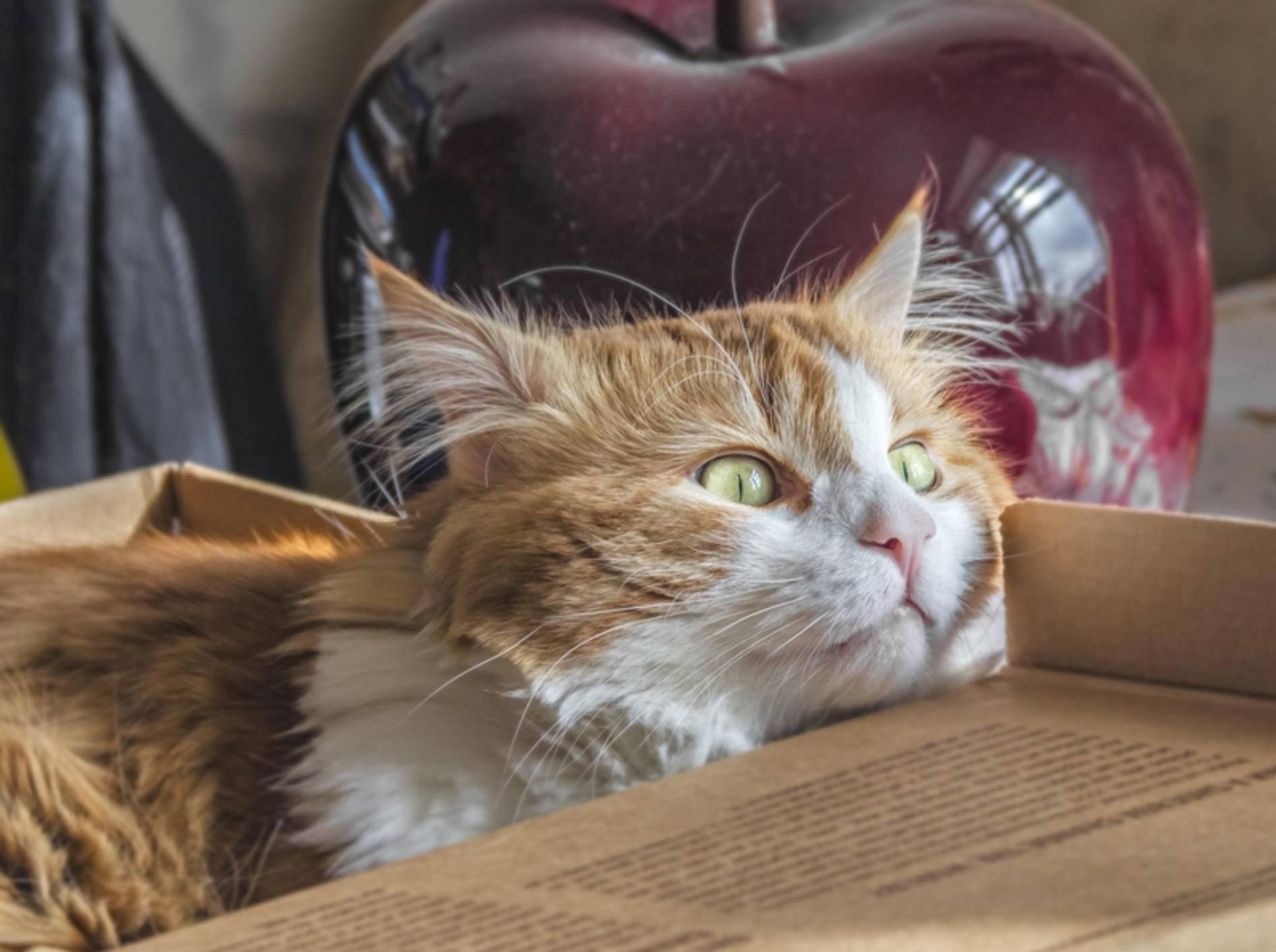 Katzen lieben es, nach verstecktem Futter zu suchen – Shutterstock / Belozerova Daria