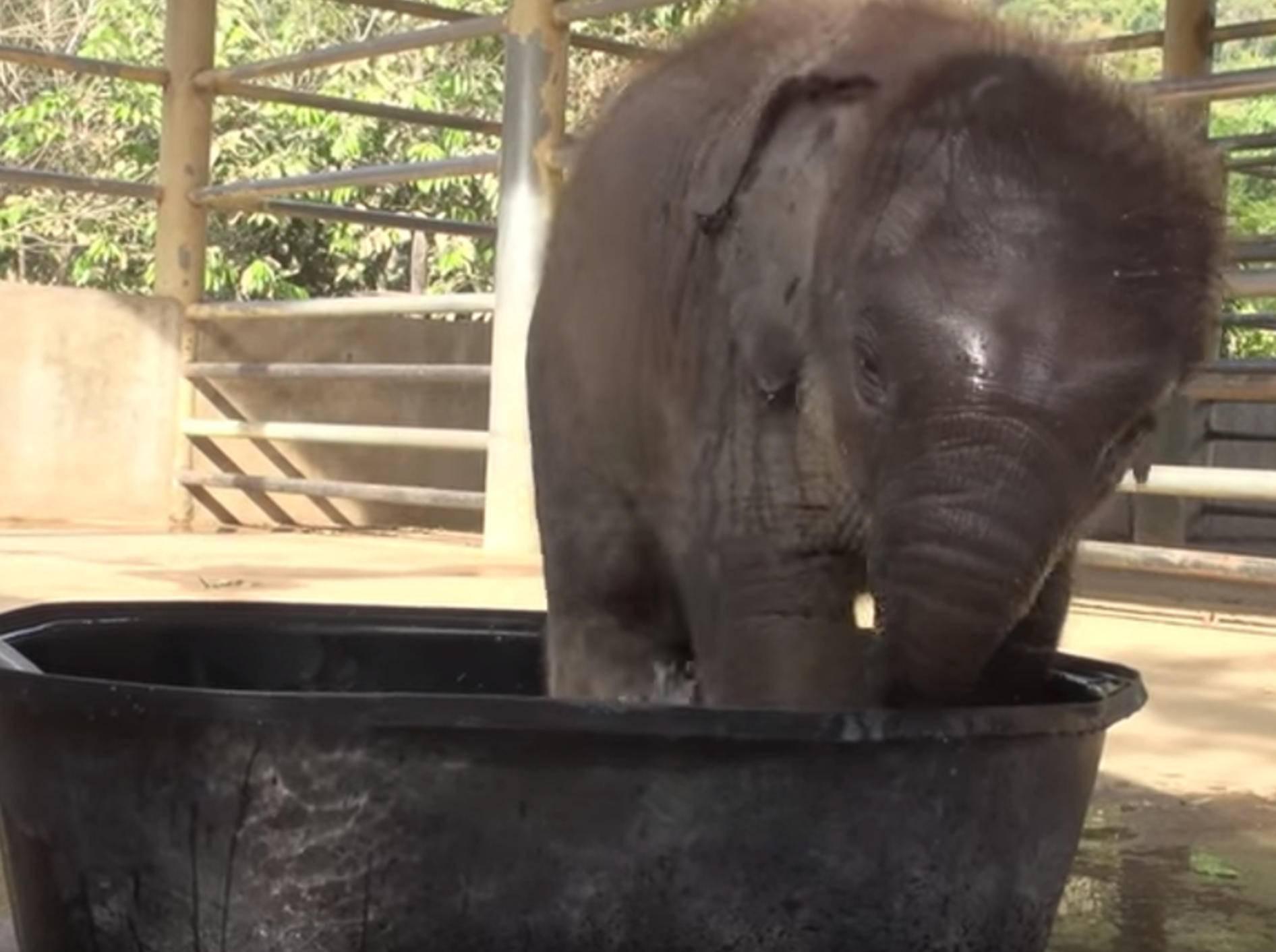 Baby-Elefant planscht im Wasserbecken – Bild: YouTube / elephantnews