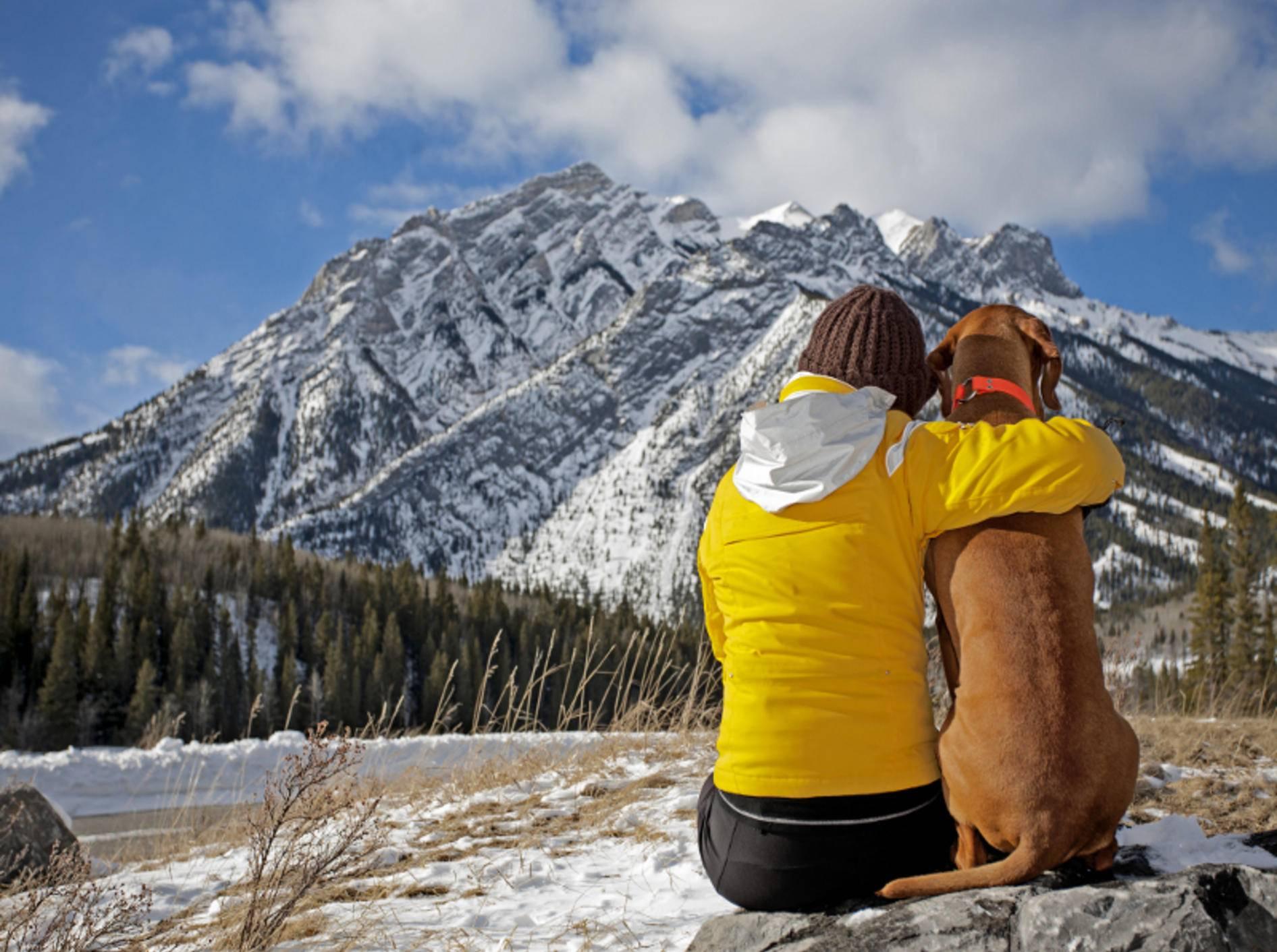 Die Natur genießt man am besten gemeinsam mit dem Hund – Shutterstock / Barna Tanko