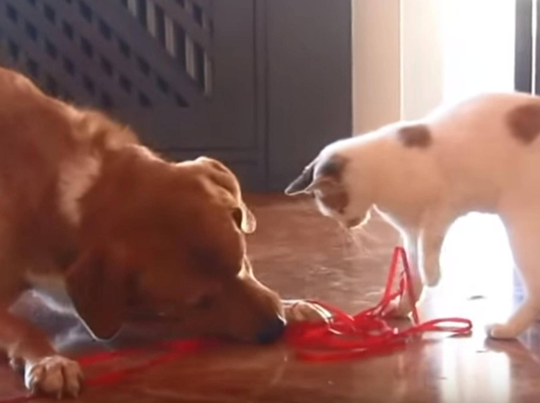 Hund und Findelkatze spielen und toben gemeinsam – Bild: YouTube / OrphanPet Gr