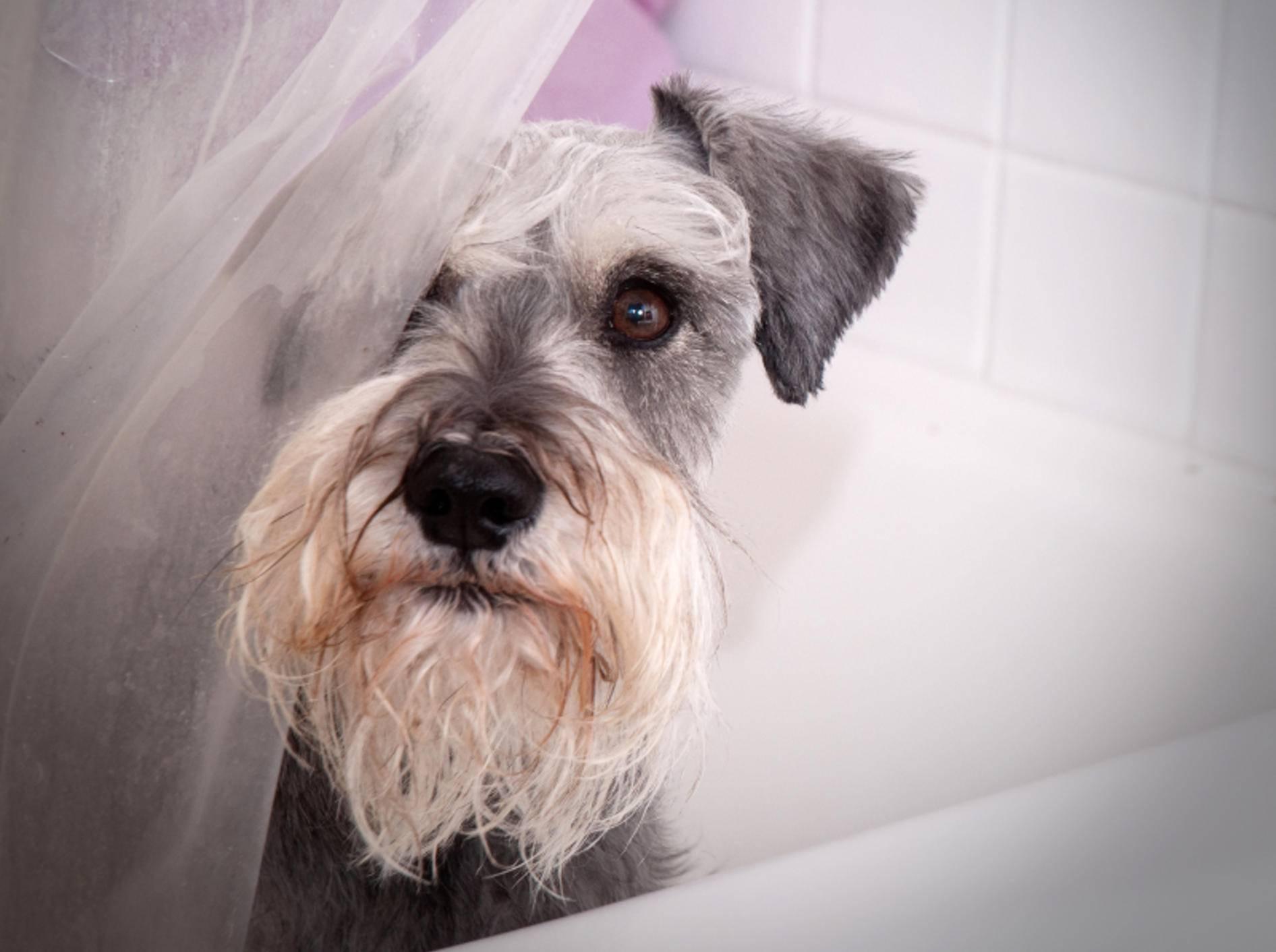 Kuckuck! – Bild: Shutterstock / Gina Callaway