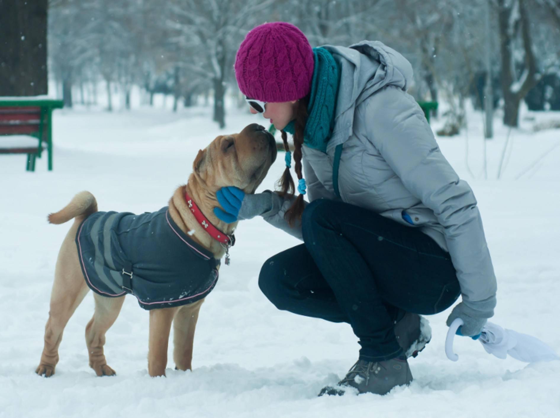 Für einige Hunde ist winterliche Hundekleidung bei Kälte sinnvoll – Shutterstock / Toshe Ognjanov