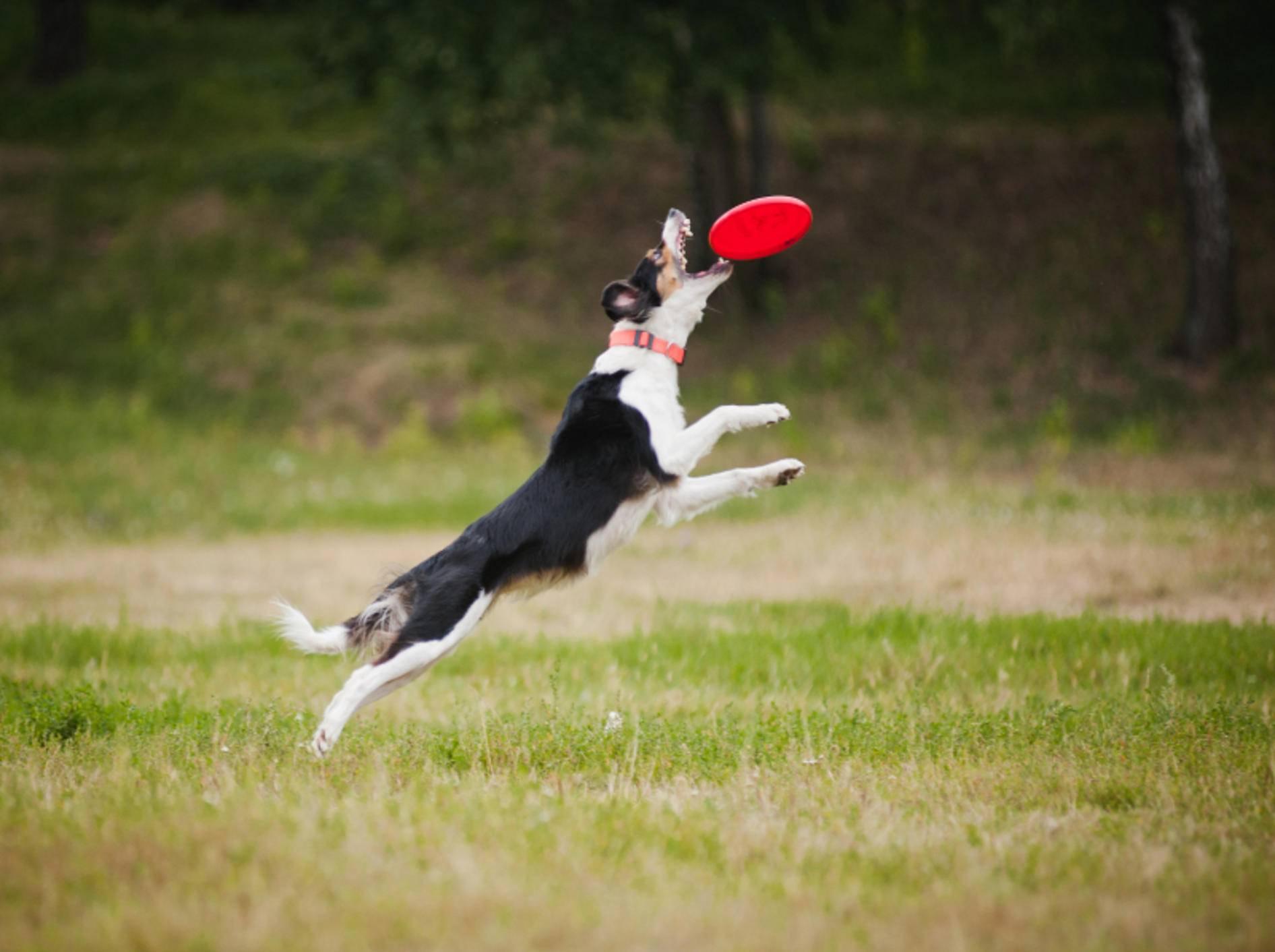 Hunde beschäftigen Sie am besten in freier Natur – Shutterstock / Ksenia Raykova