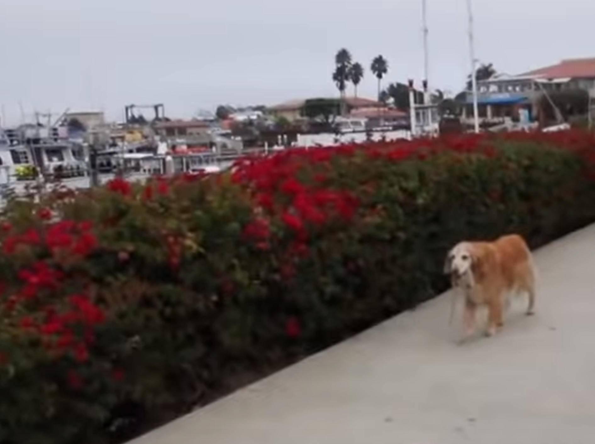 Selbst ist der Hund: Wenn Vierbeiner unabhängig werden – Bild: YouTube / The Dodo