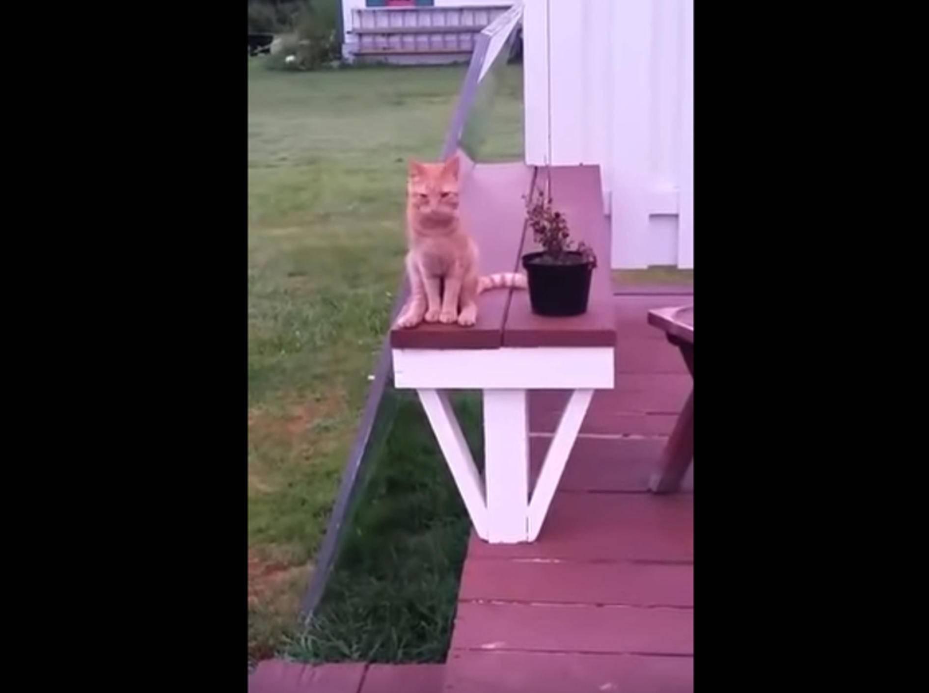 Rote Katze: Sitzhaltung wie ein Mensch – Bild: YouTube / ViralHog