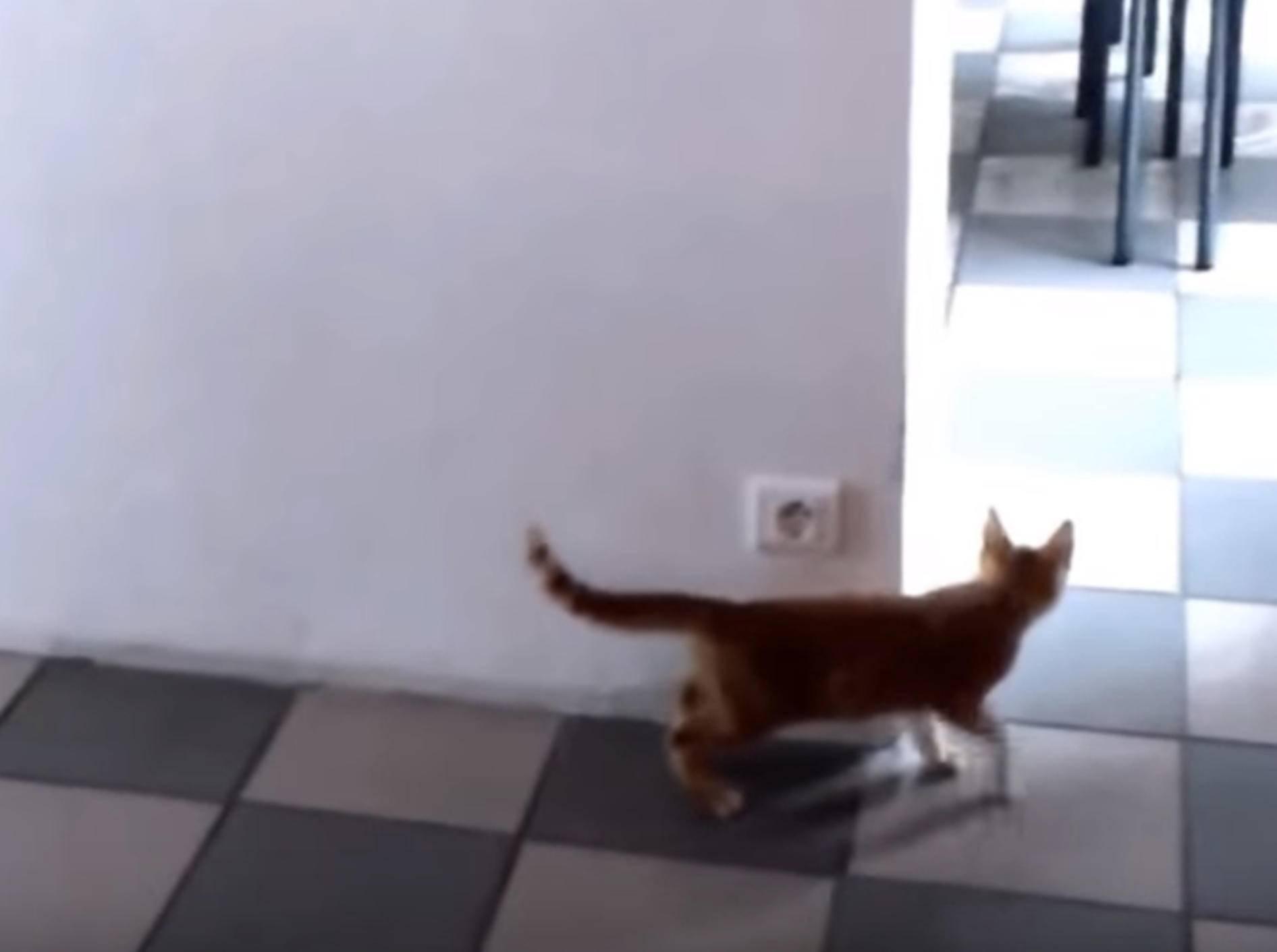 """""""Buh!"""" Freches Kätzchen von Artgenossen ausgetrickst – Bild: YouTube / Leon Hudson"""