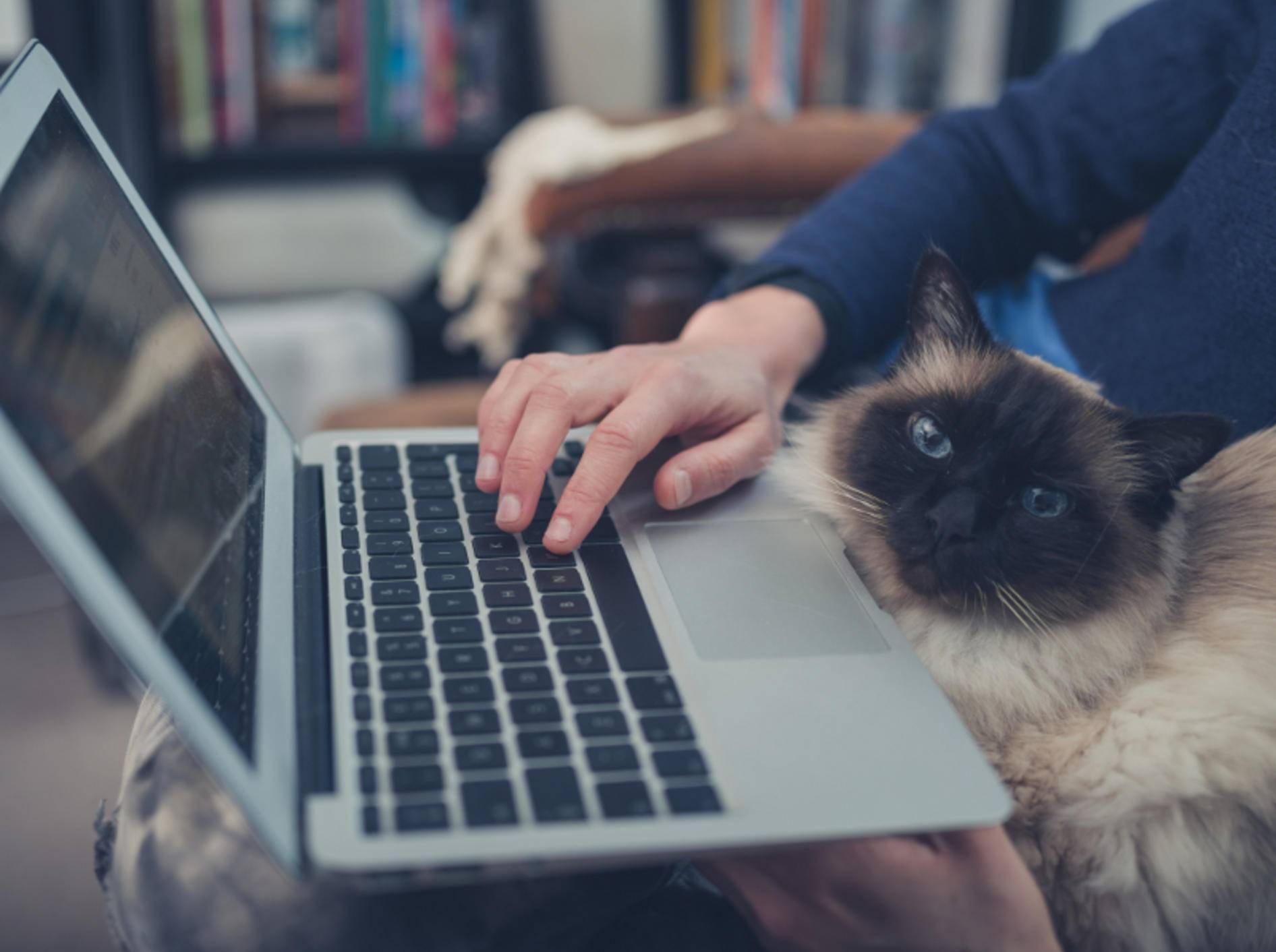 """""""Ob das stimmt, was da steht?"""", könnte sich diese Katze denken – Shutterstock / LoloStock"""