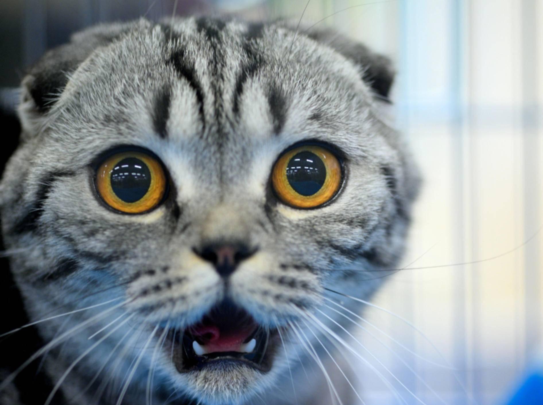 """Waaas? Kater Garfield ist bloß eine Comicfigur?"" – Bild: Shutterstock / The Len"