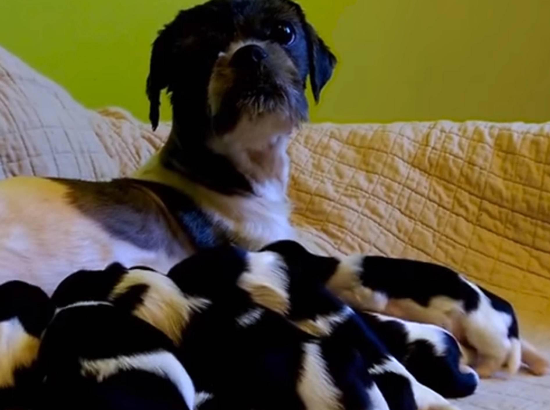 Nach Rettung: Hundemama und ihre Babys fühlen sich wohl – Bild: YouTube / The Dodo