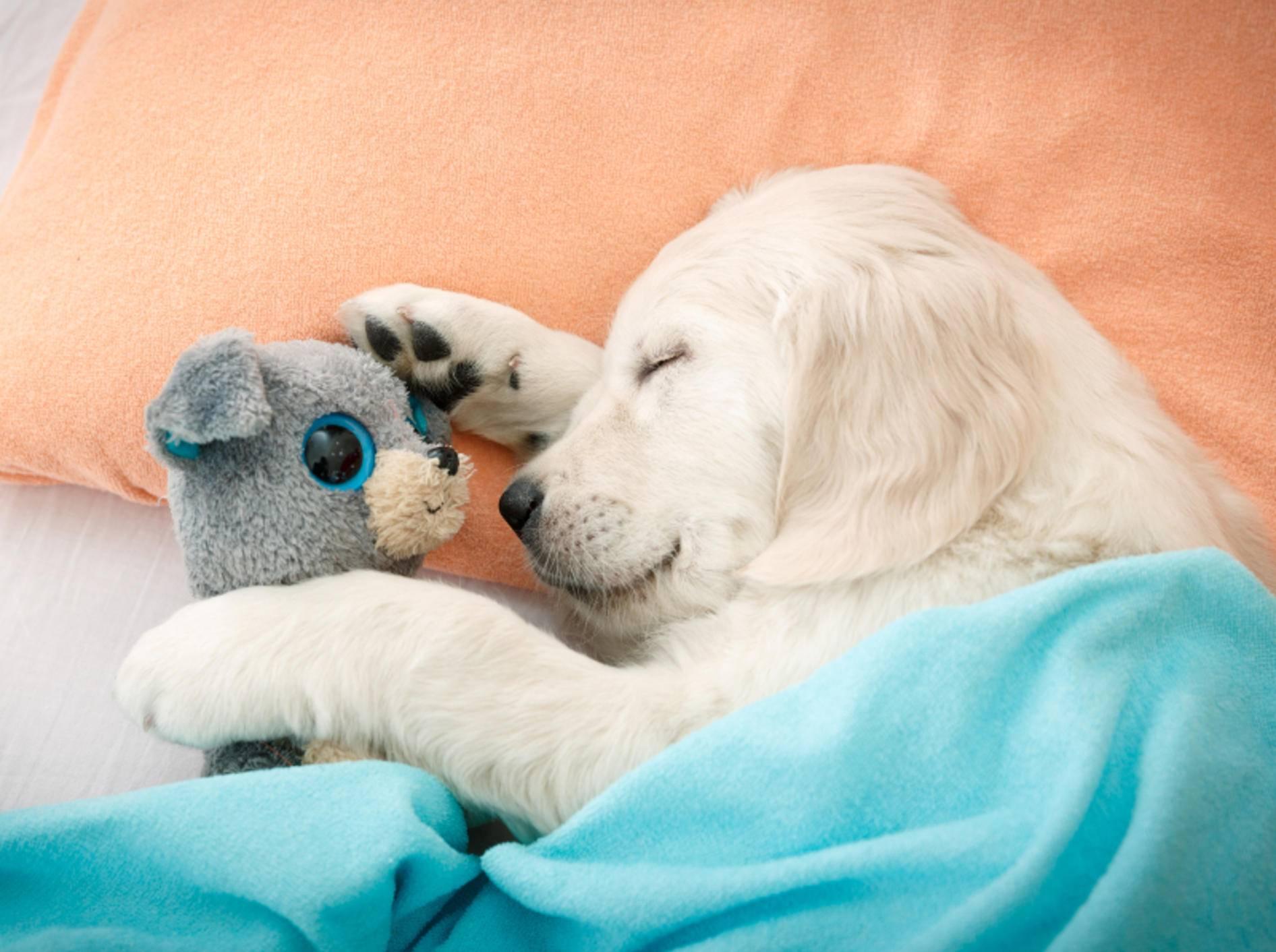 """""""Ohne mein Kuscheltier kann ich nicht schlafen!"""" – Bild: Shutterstock / NotarYES"""