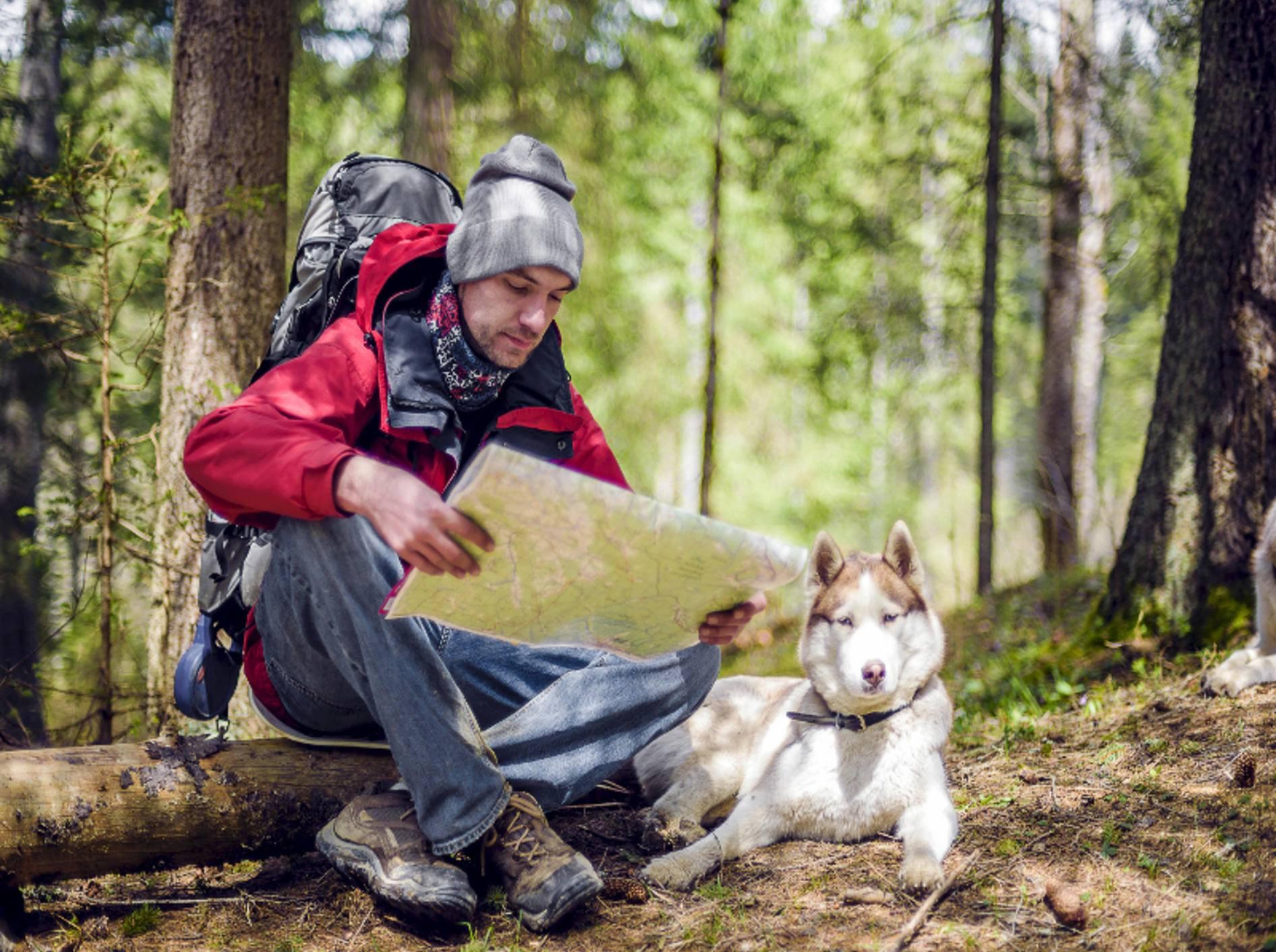 Gut ausgerüstet wird das Wandern mit dem Hund zum perfekten Abenteuer – Shutterstock / Osadchaya Olga