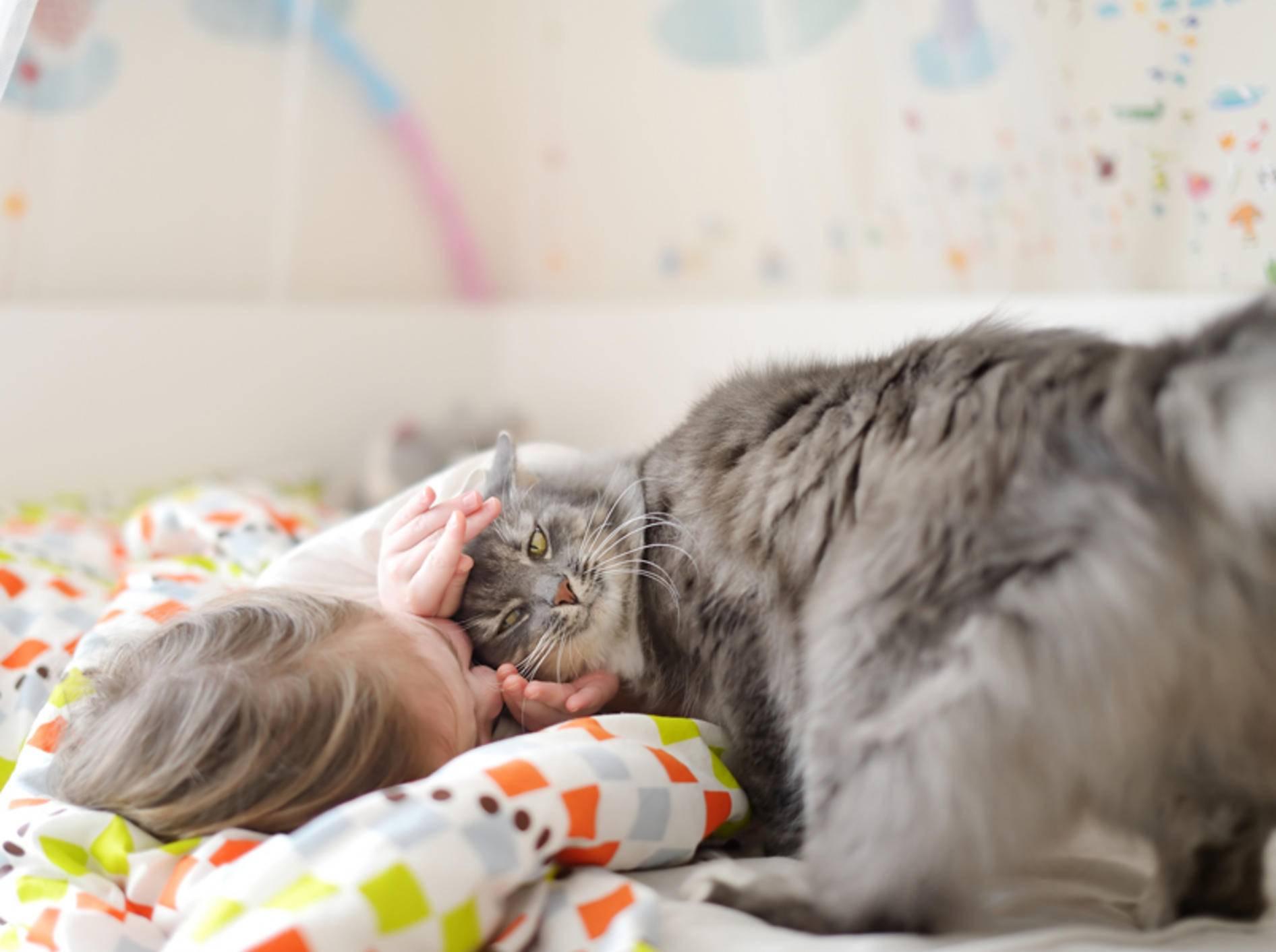 """""""Schlafen? Nichts da!"""", scheint diese Katze zu denken – Shutterstock / MNStudio"""