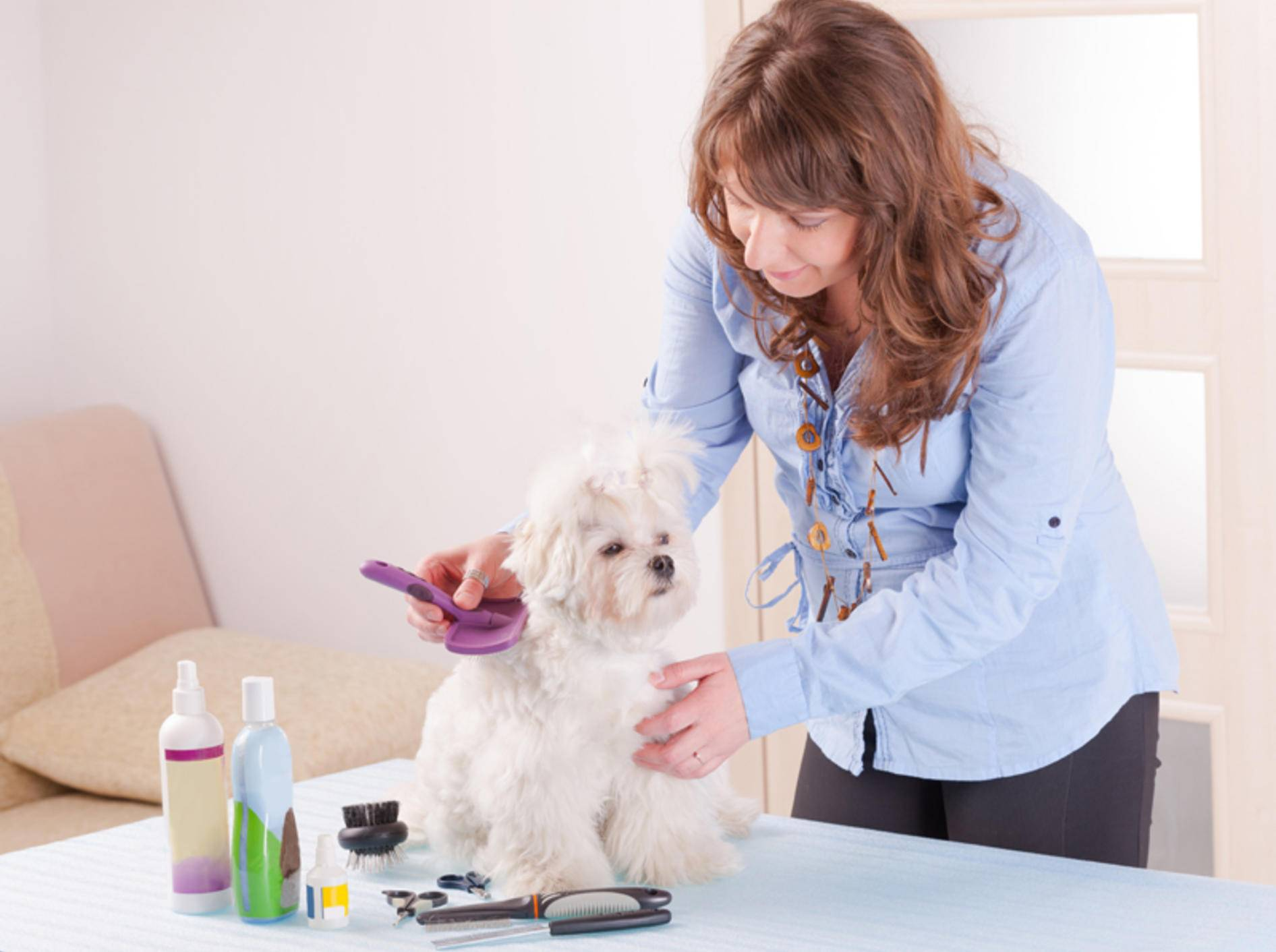 Eine regelmäßige Fellpflege stärkt das Wohlbefinden Ihres Hundes – Shutterstock / Monika Wisniewska