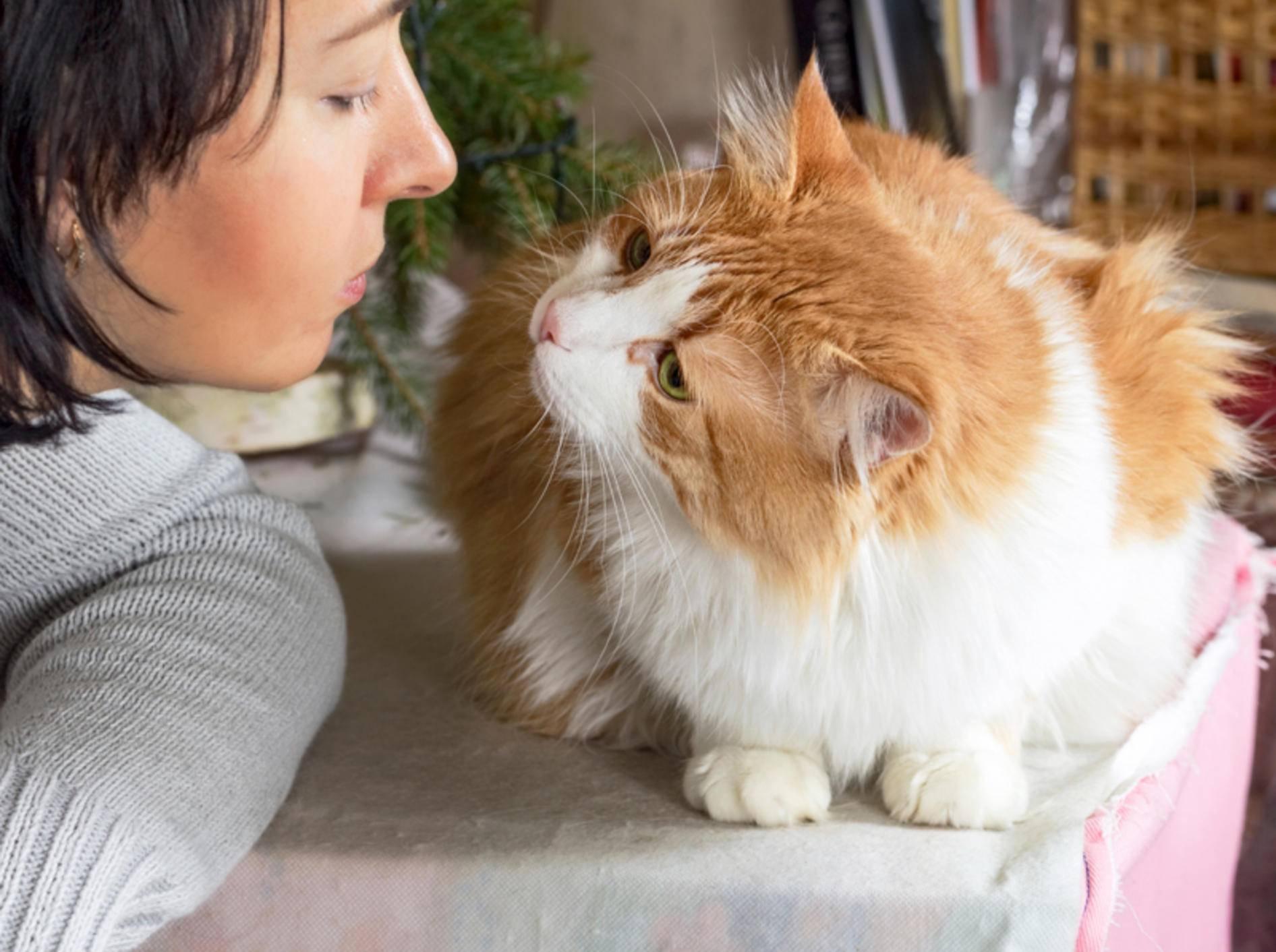 Wichtig für die Mensch-Katze-Beziehung: Miteinander sprechen – Shutterstock / Belozerova Daria